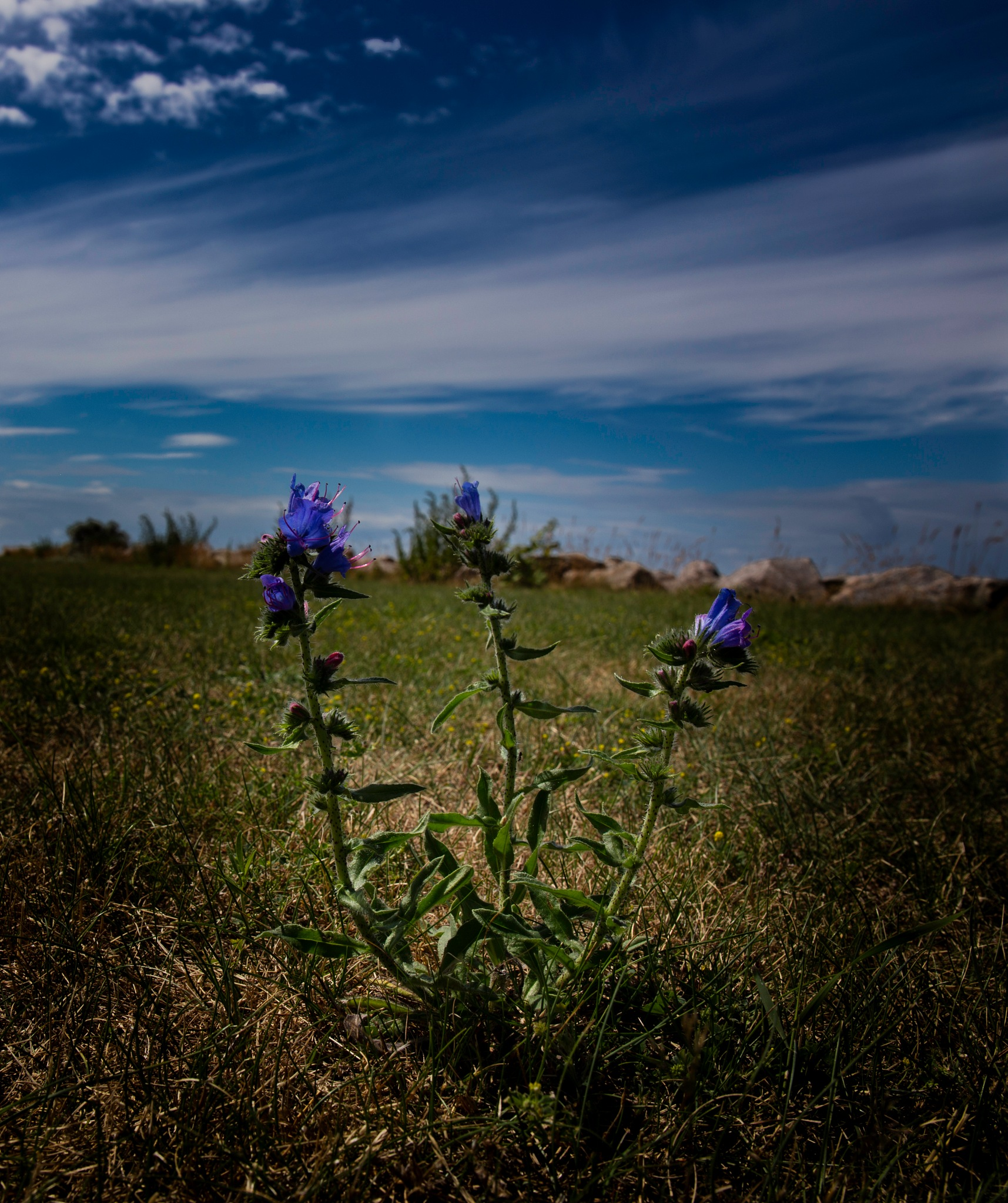 a little flower by erling.pehrsson