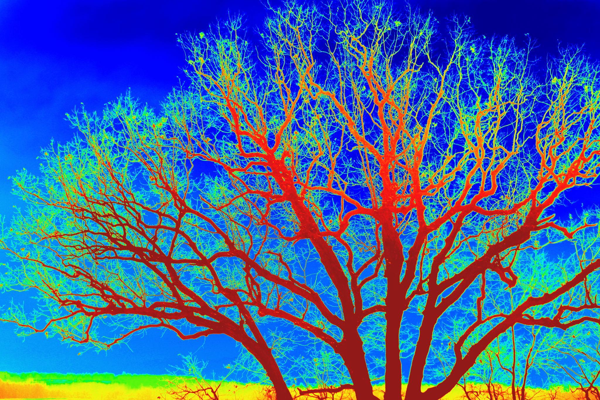 Dream tree by midge.vanetten