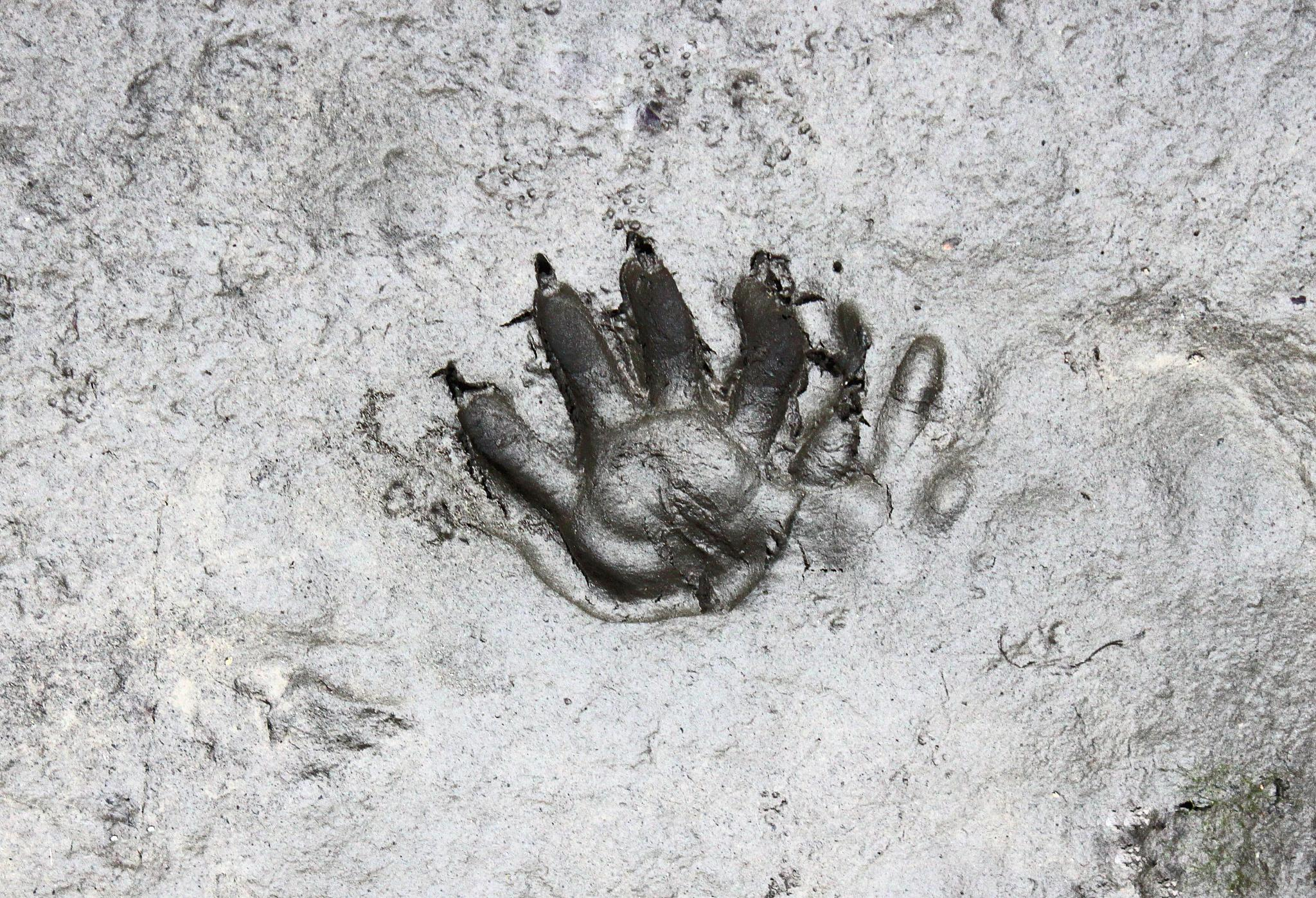 Raccoon Handprint by Elizabeth