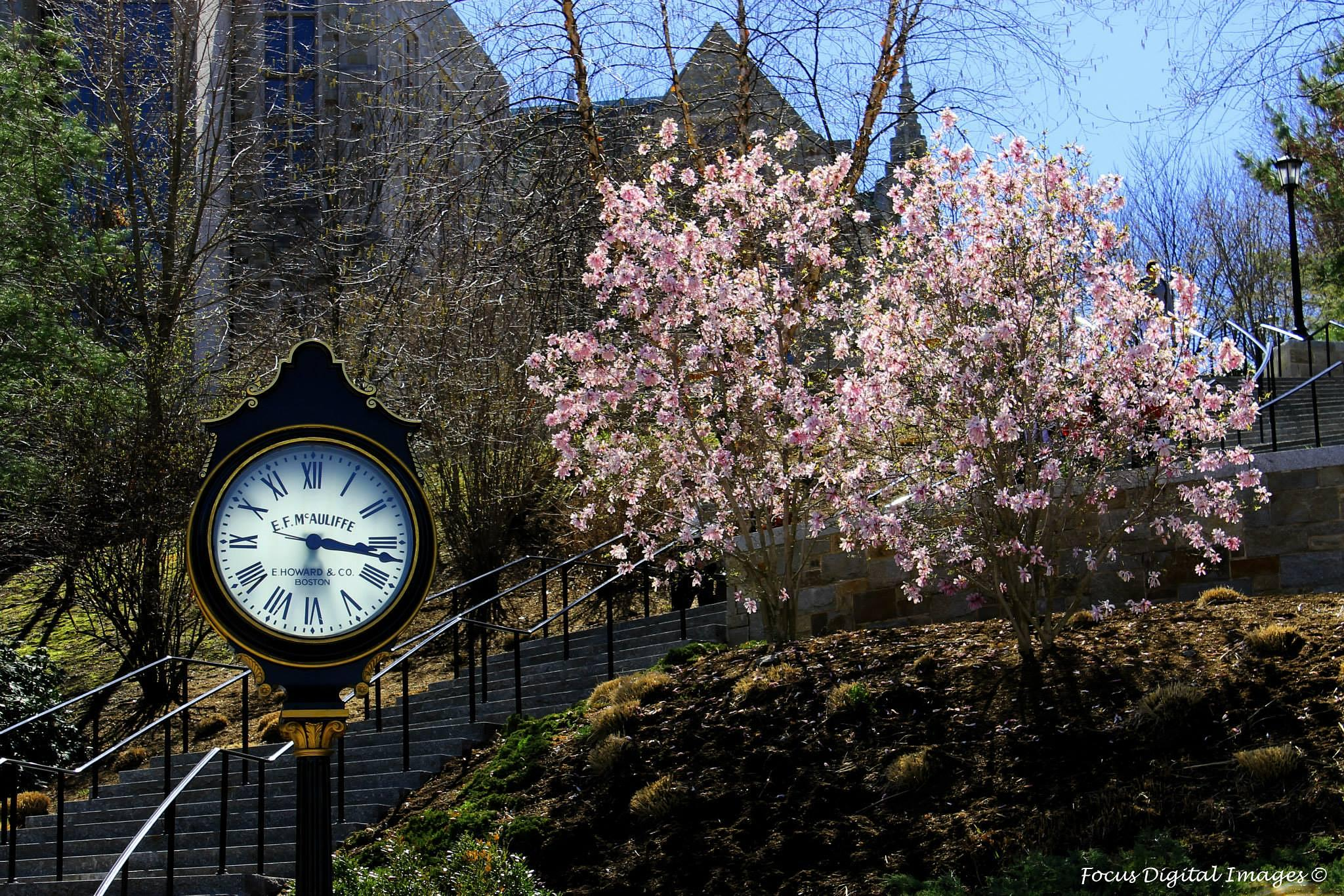 Boston College, Boston, MA in the spring time! by atm102065