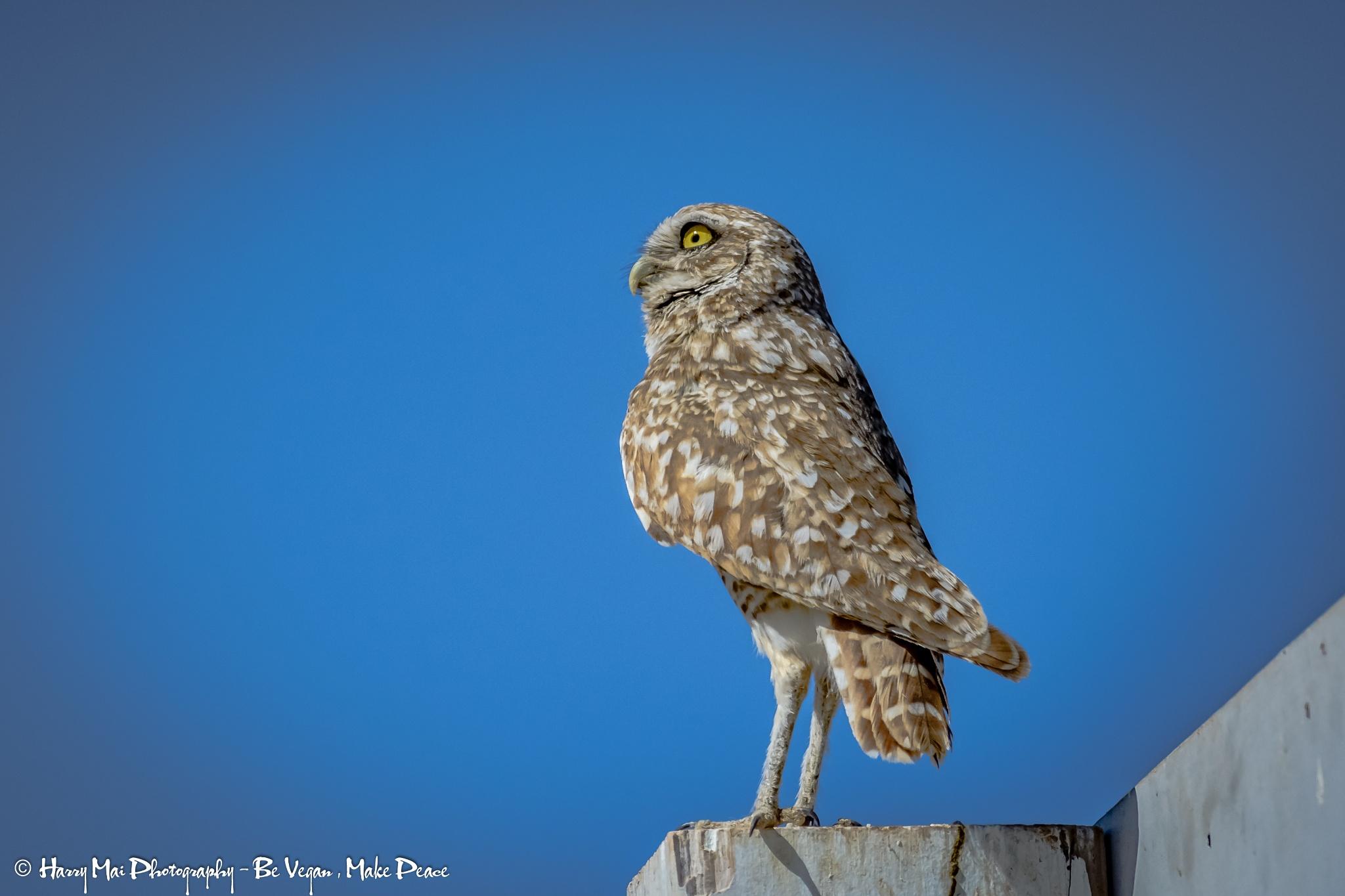 Photo in Animal #owl #bird #nature