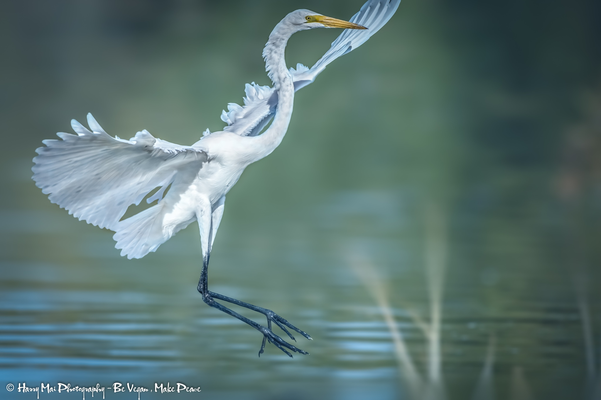 Morning Dance by Harry Mai