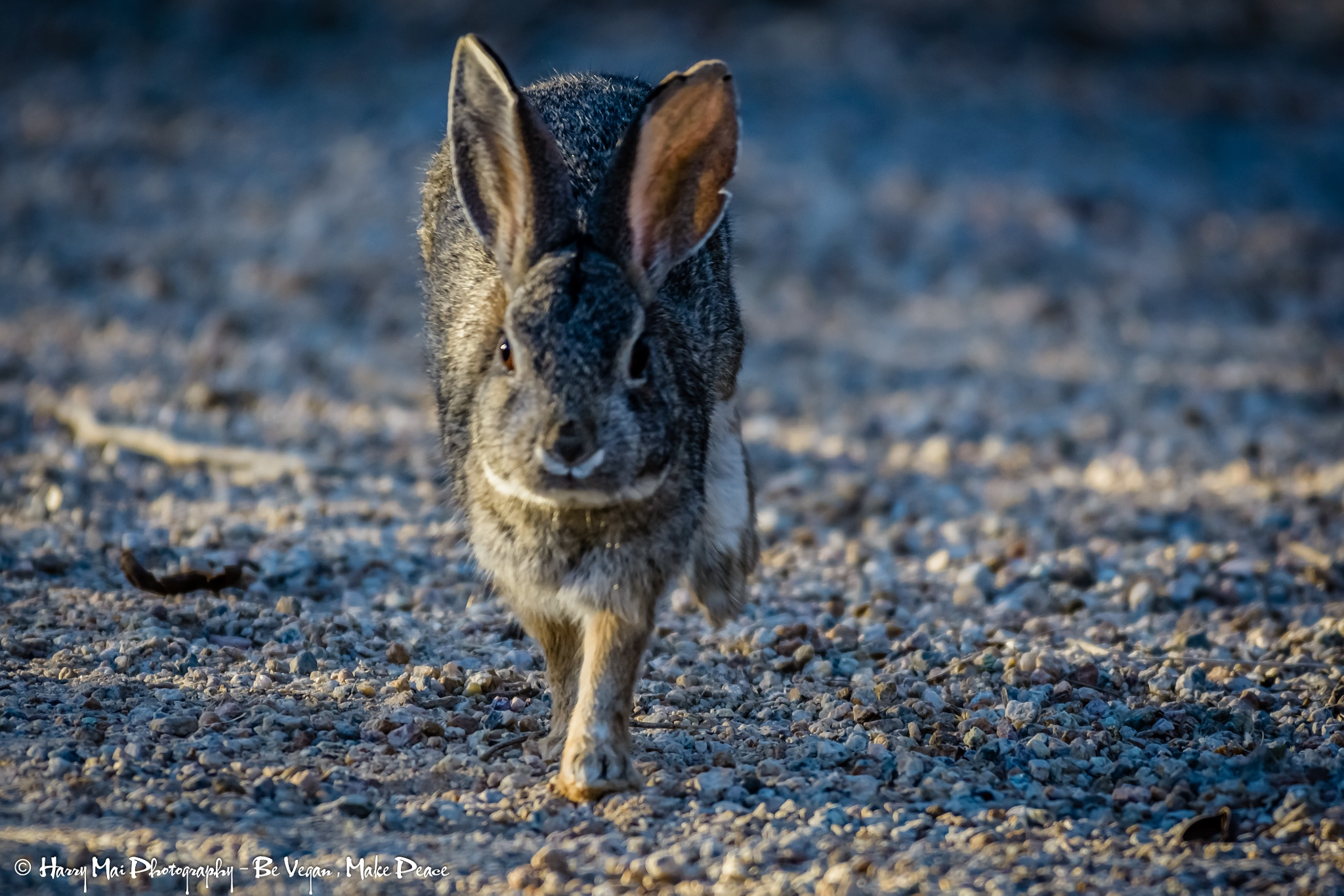 Mr. Rabbit by Harry Mai