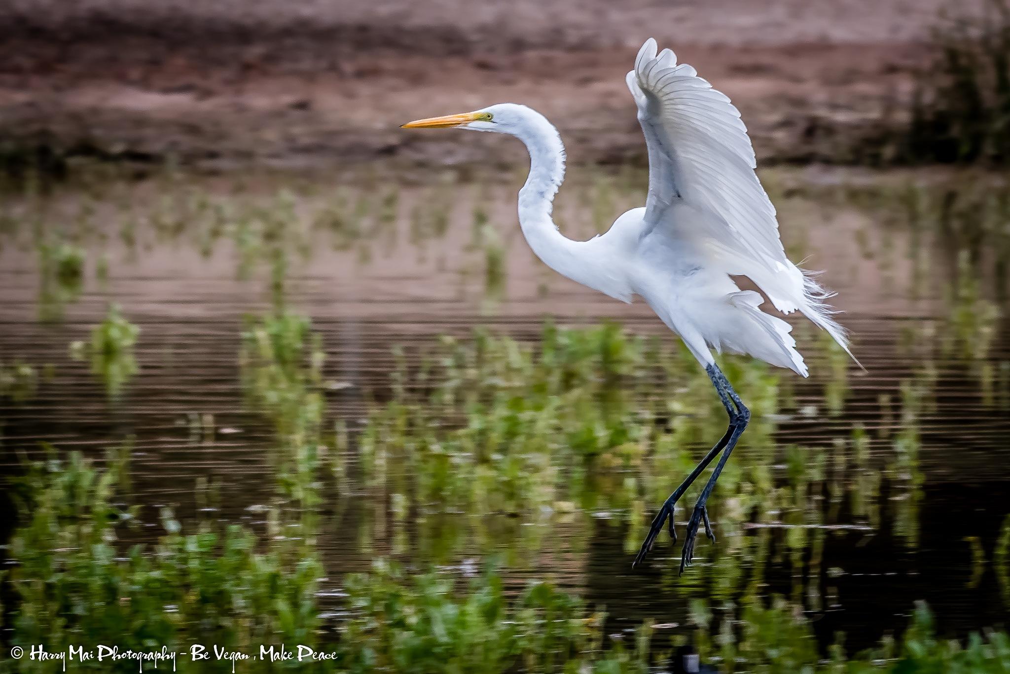 Bird Landing by Harry Mai
