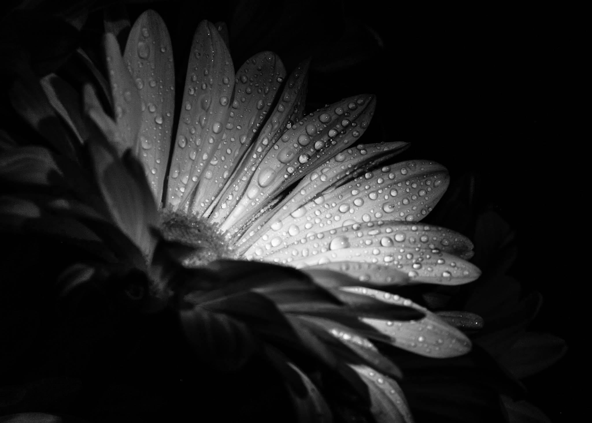 B&W flower by Smiley544