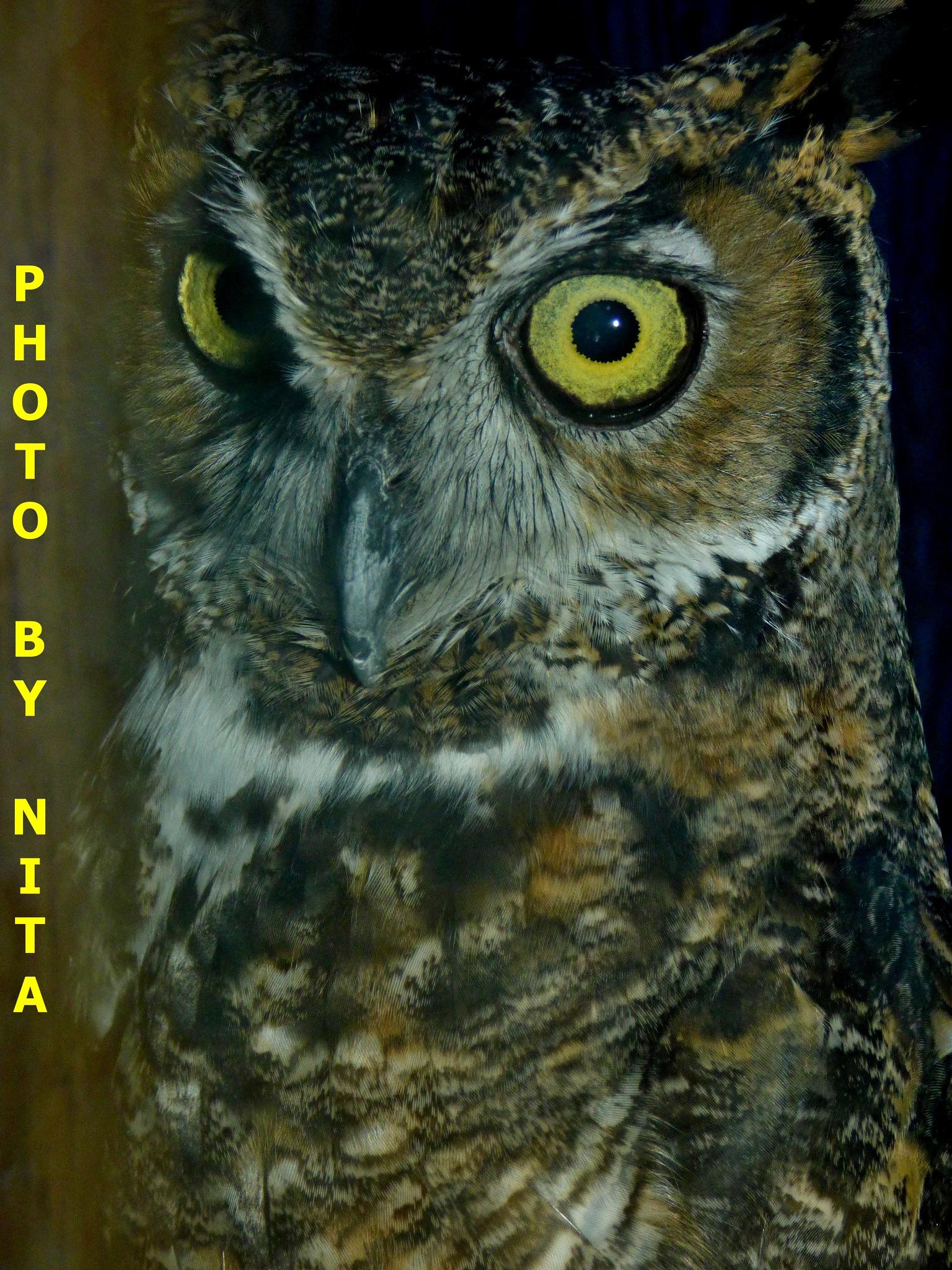 Owl Eyes by nita.andrews.7