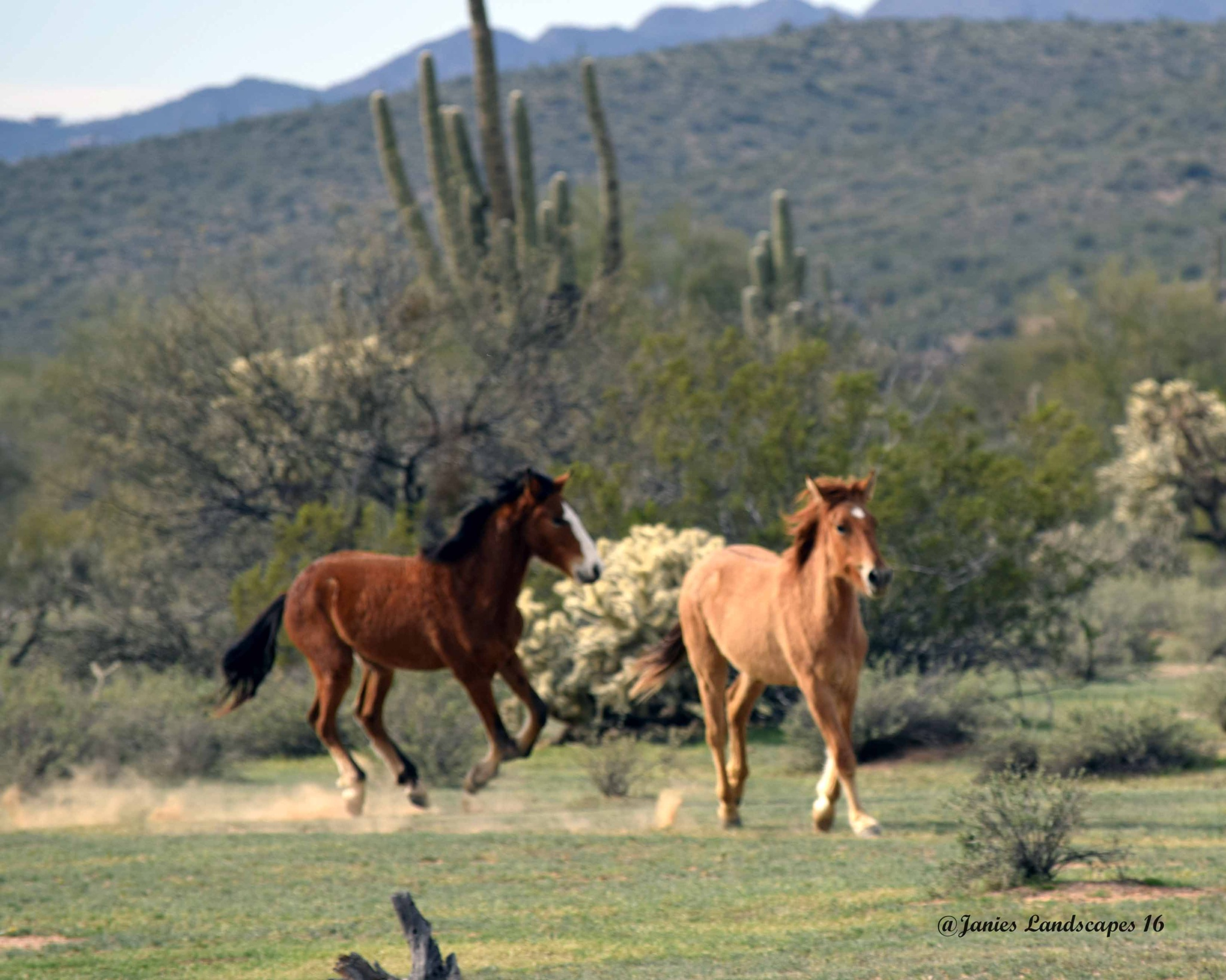 Wild Horses by JanetSNeil
