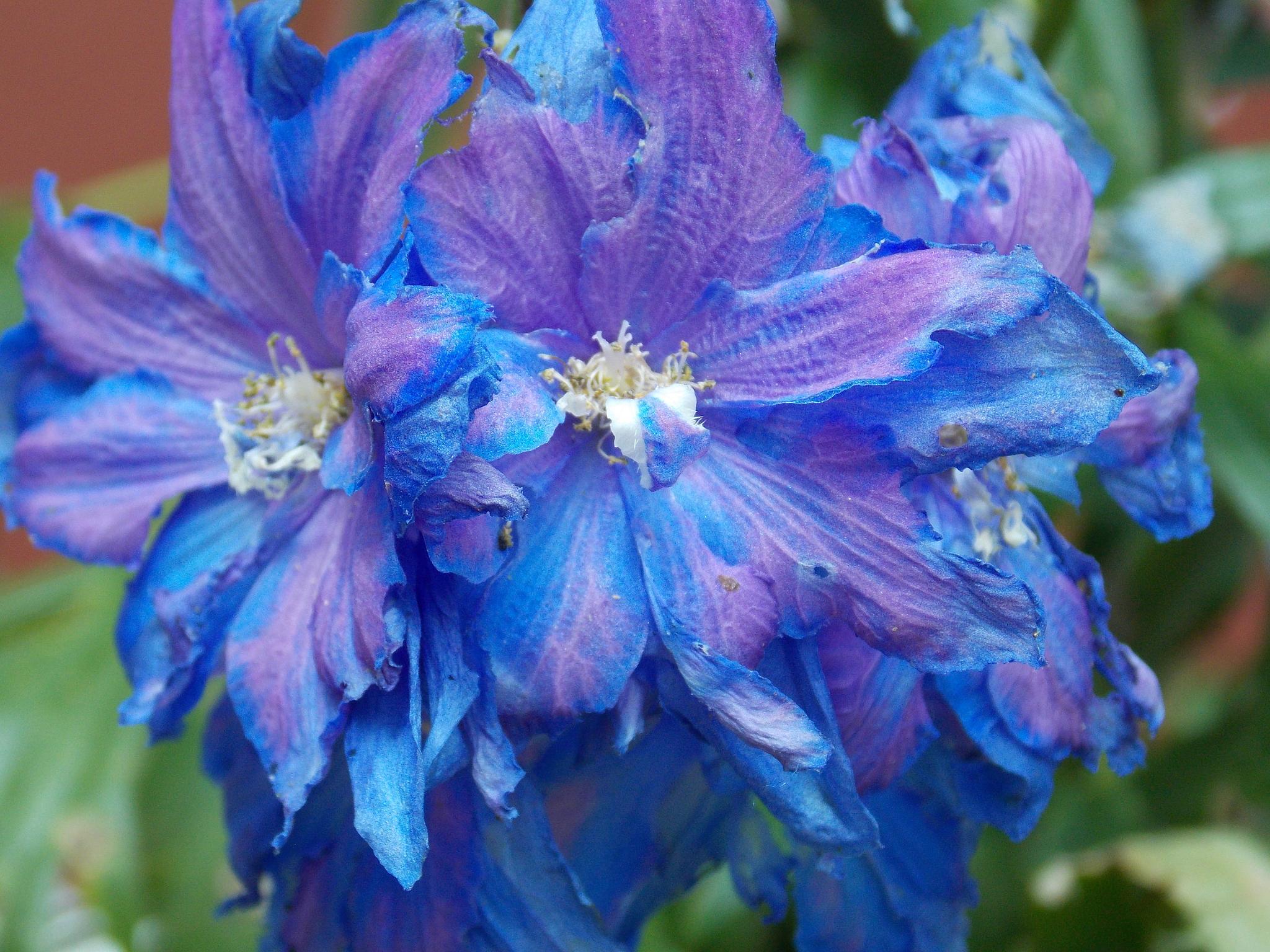 Blue/ Purple Flower Bunch by JanetSNeil