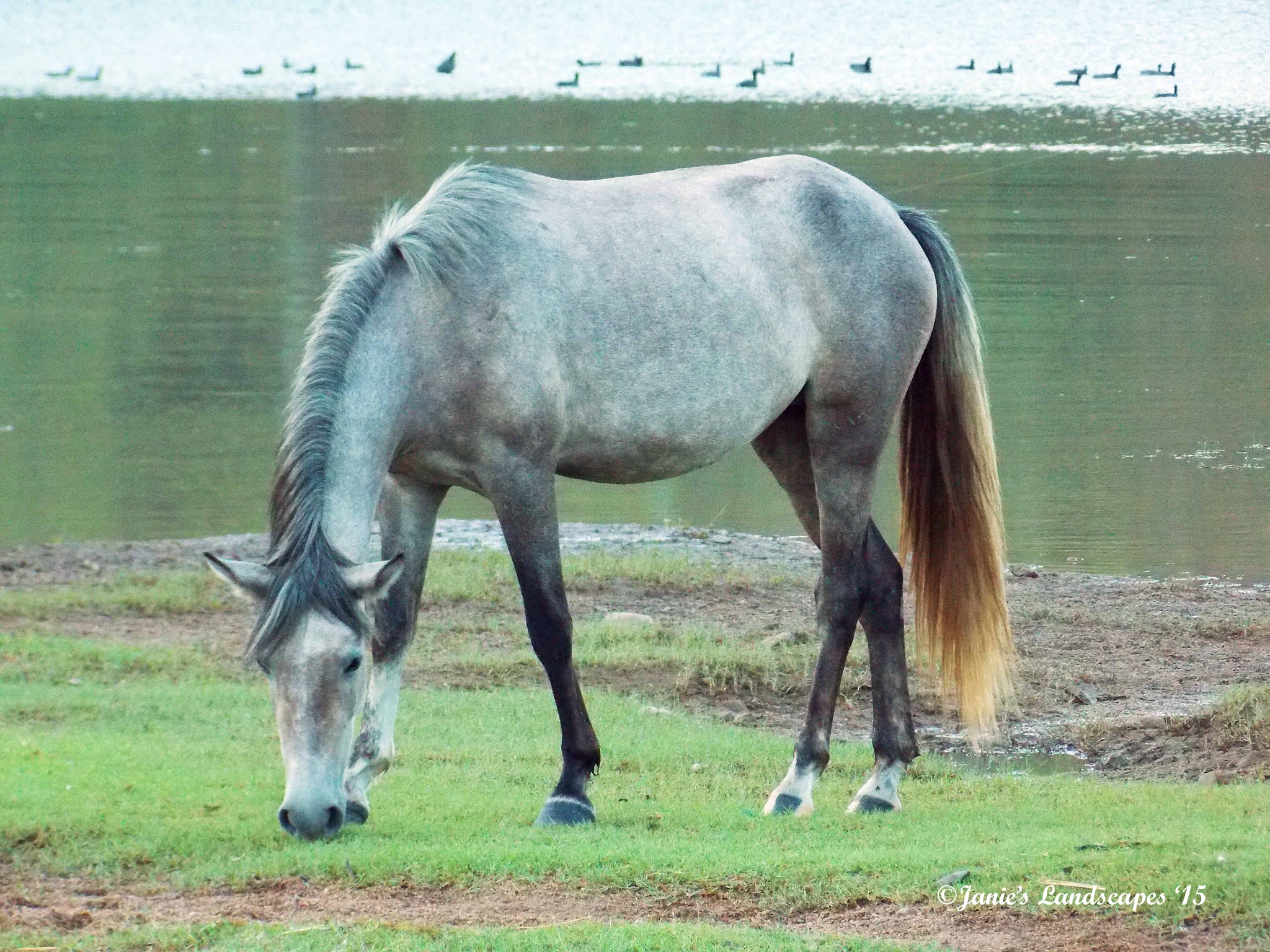 Salt River Wild Horses by JanetSNeil