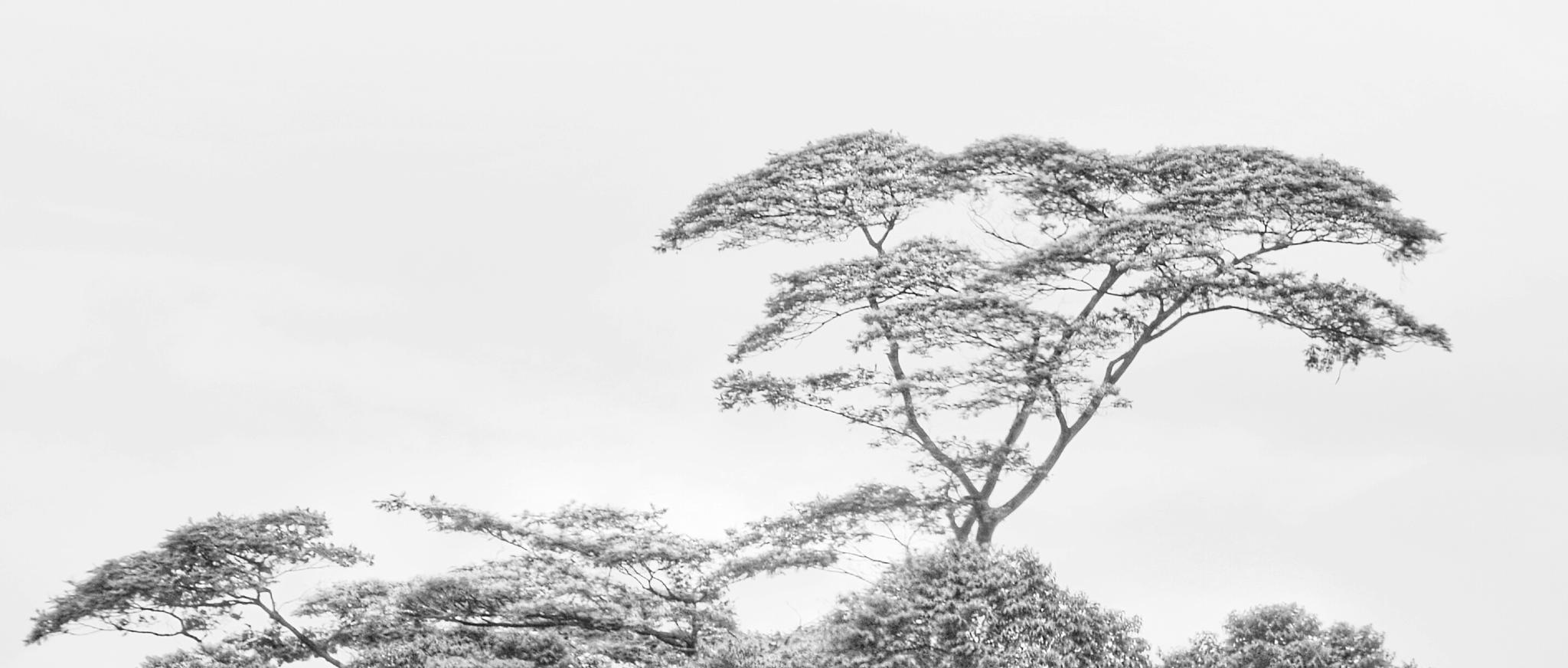 Just tree by bambang irawan