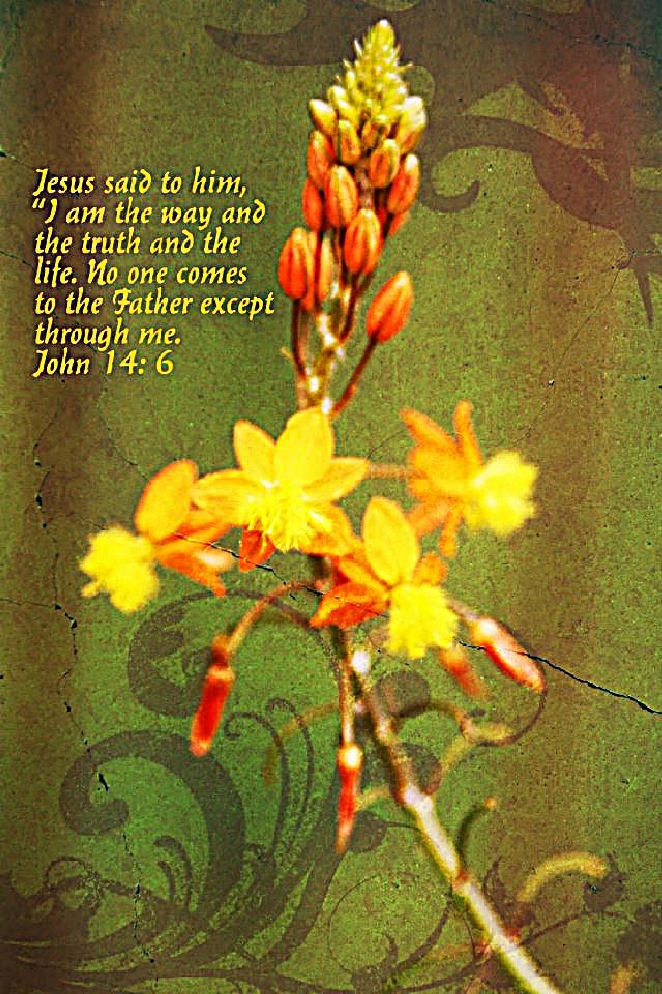 John 14:6 by KimParrish