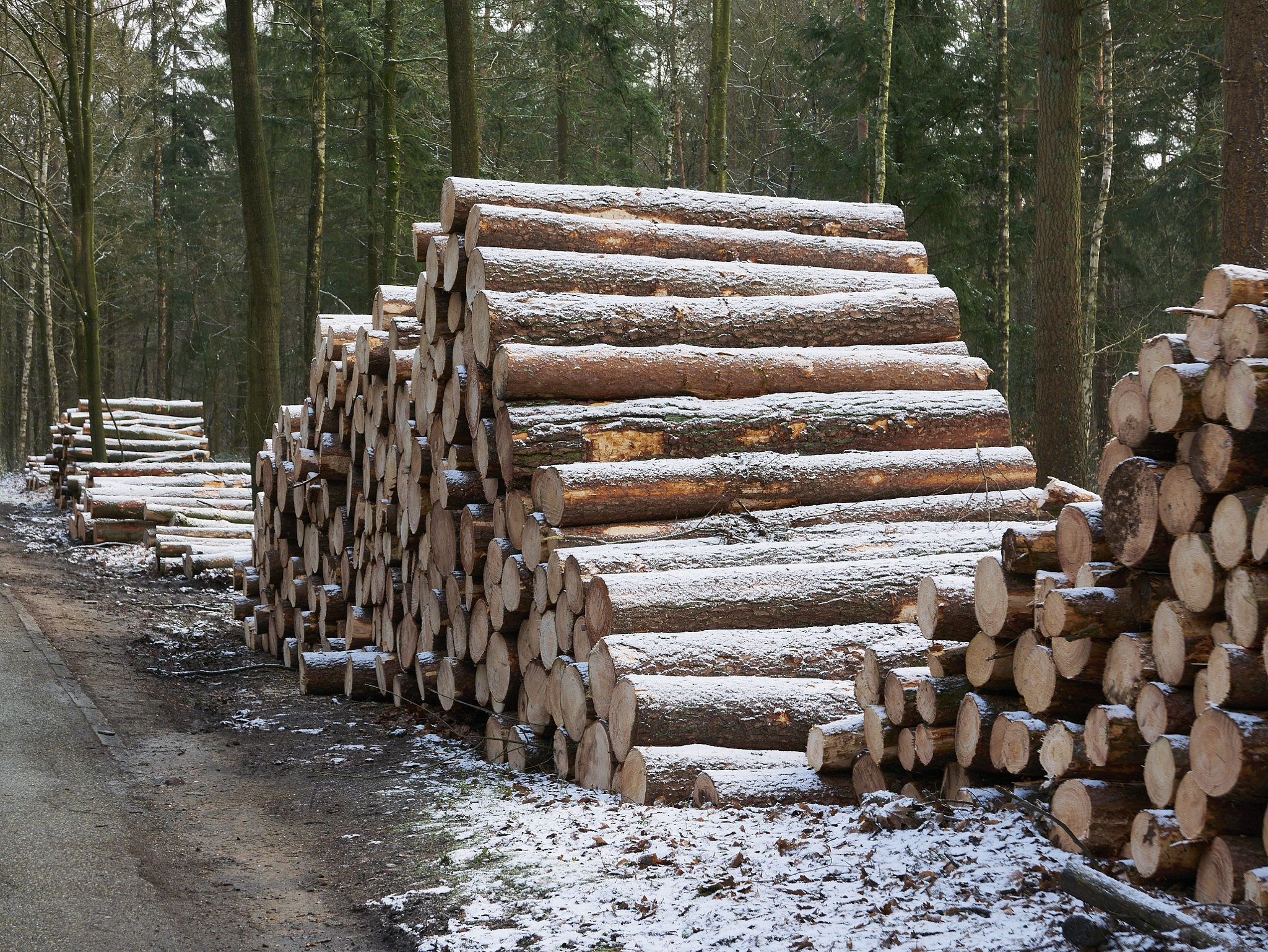 Need wood ? by theseend