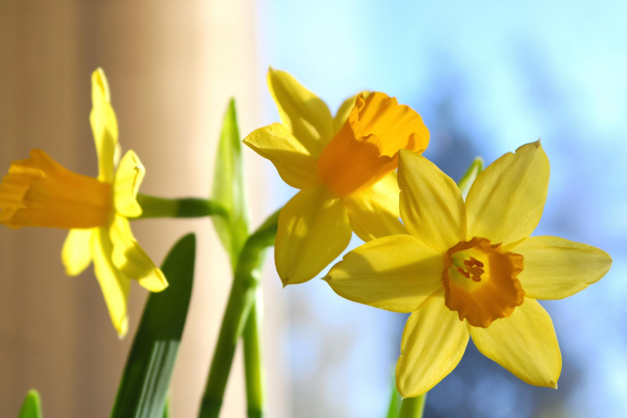 Spring at home. by ParisHavanna