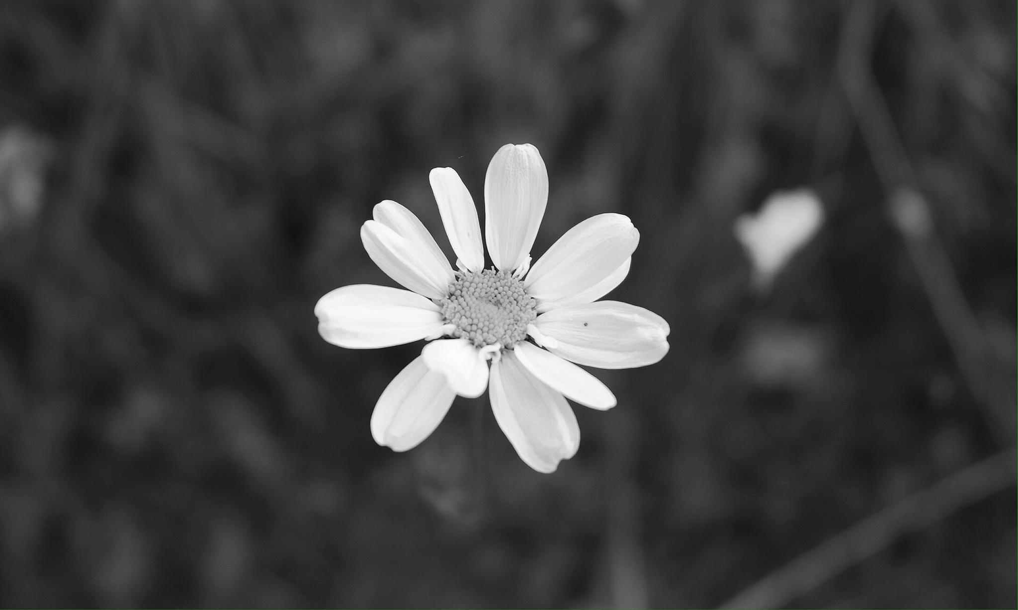 Simply Alone by ParisHavanna