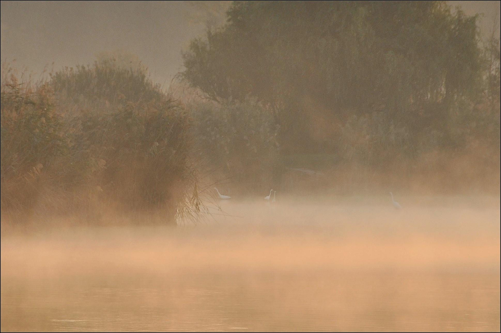 foggy dawn by zdenkostricki