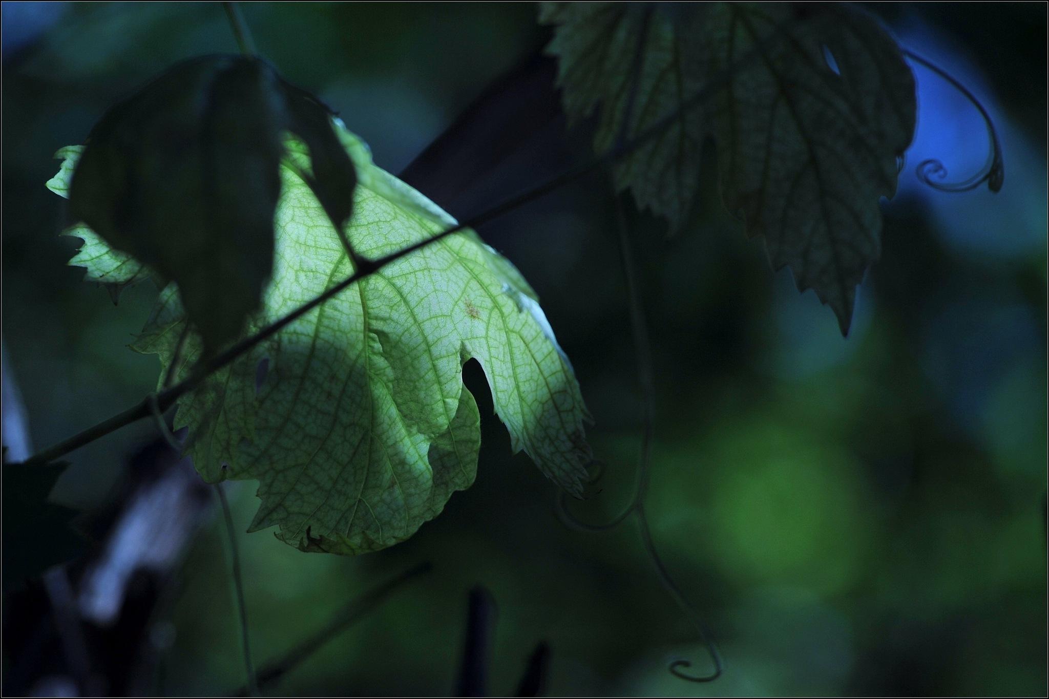 green shade by zdenkostricki