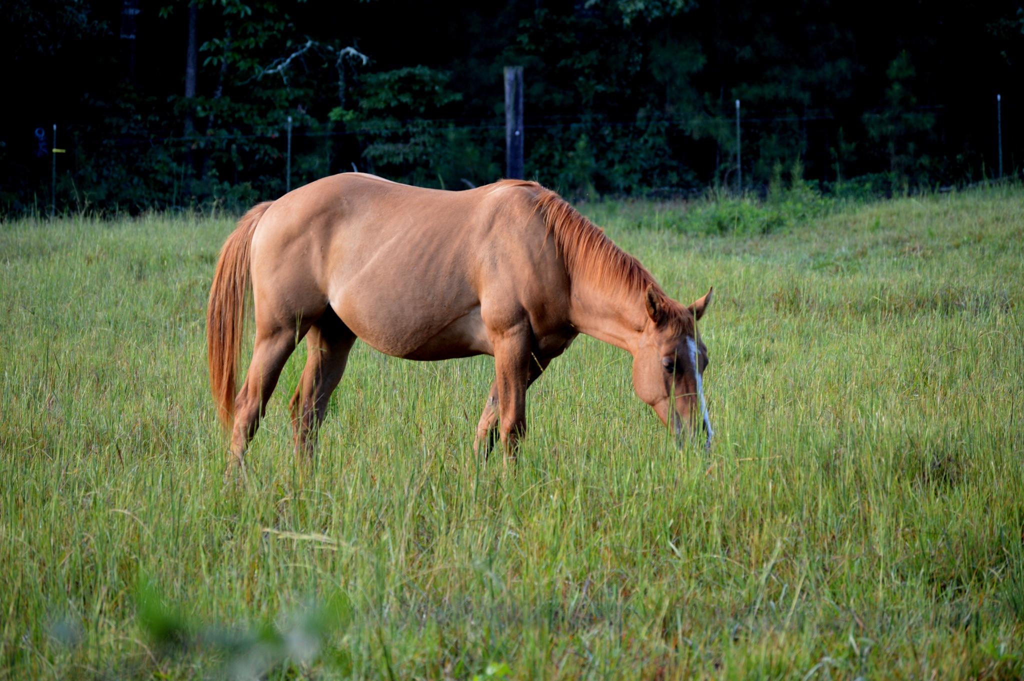 Horse by SindeAnn