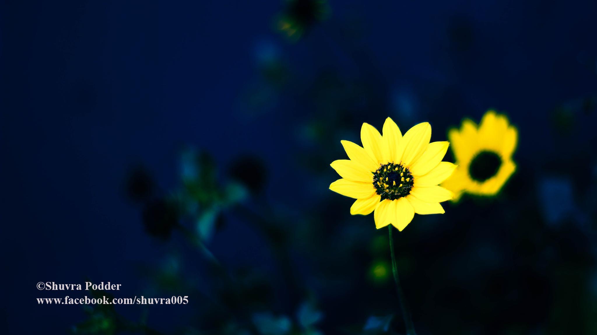 Untitled by Shuvra Podder