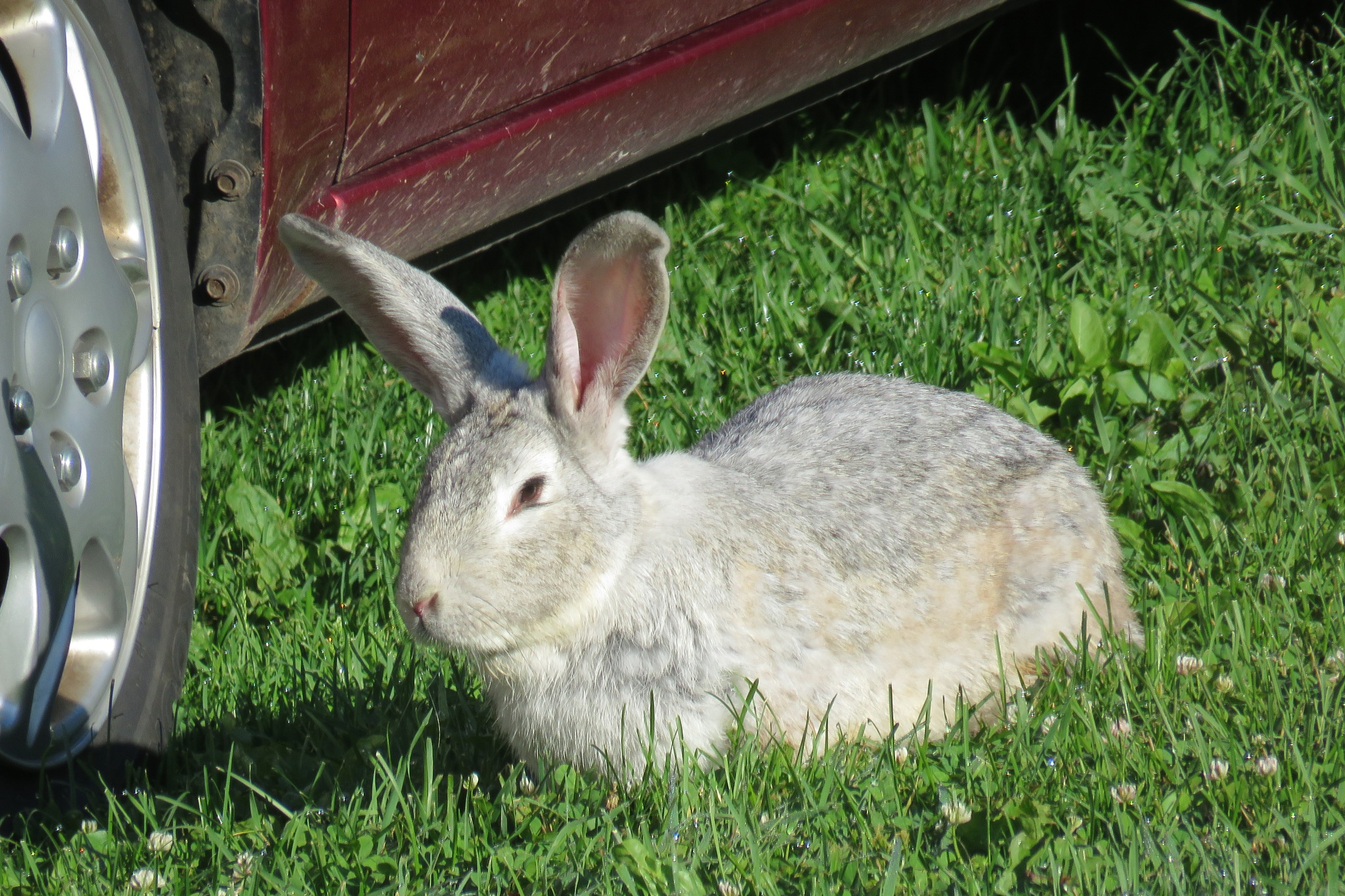 A Rabbit moved in by janet.fisher.503