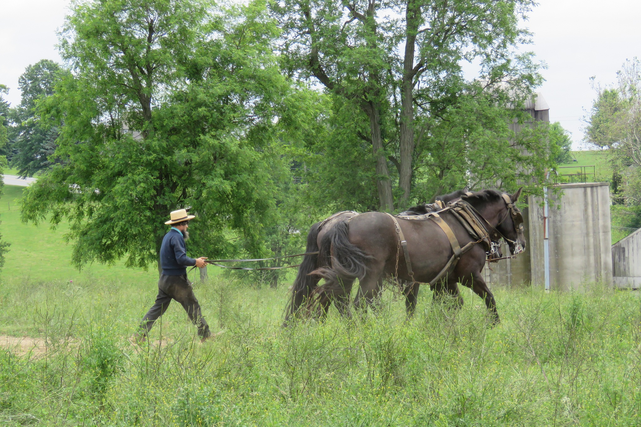 A Work day for the Amish by janet.fisher.503