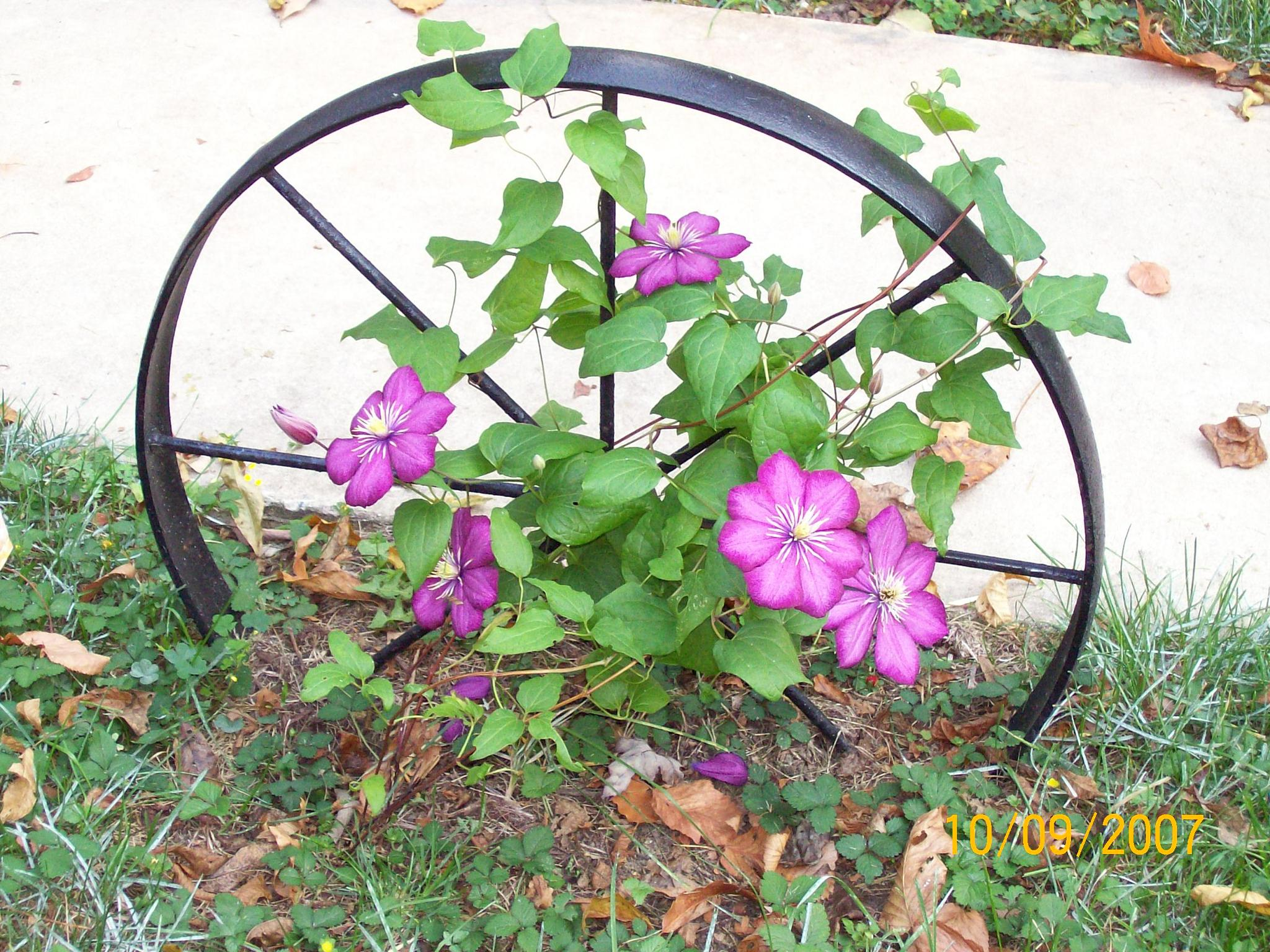 Wheel of Flowers by janet.fisher.503
