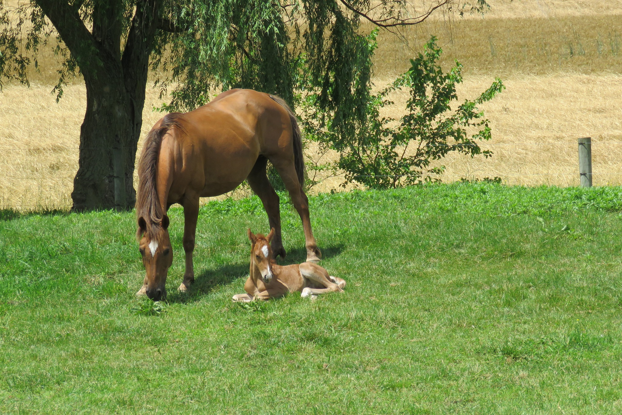 Mommy & Baby by janet.fisher.503