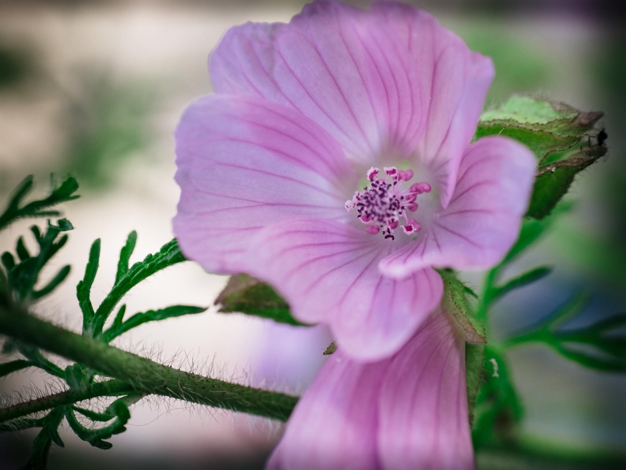 Flower by Mikael Ulfenborg
