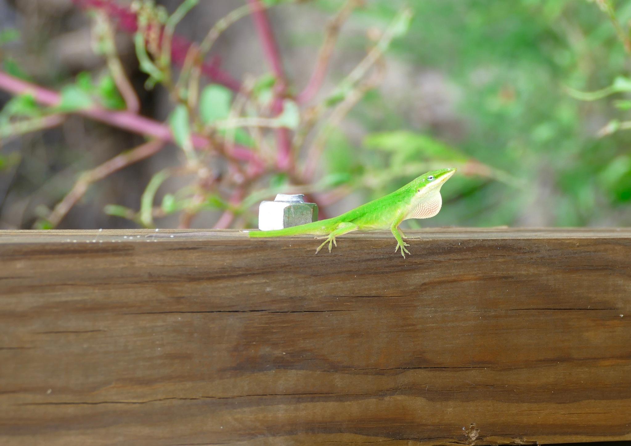 Lizard  by Underwood Design Studio