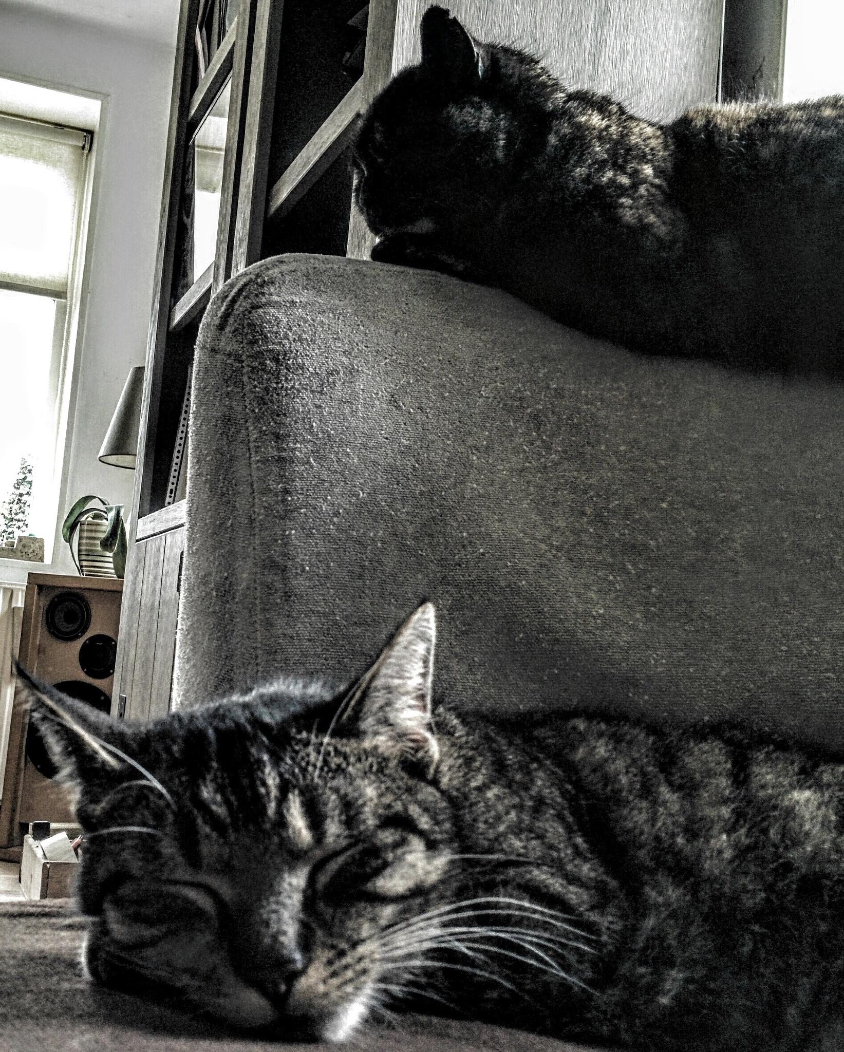 Lazy Sunday! by Hélène Melet-Fouchier