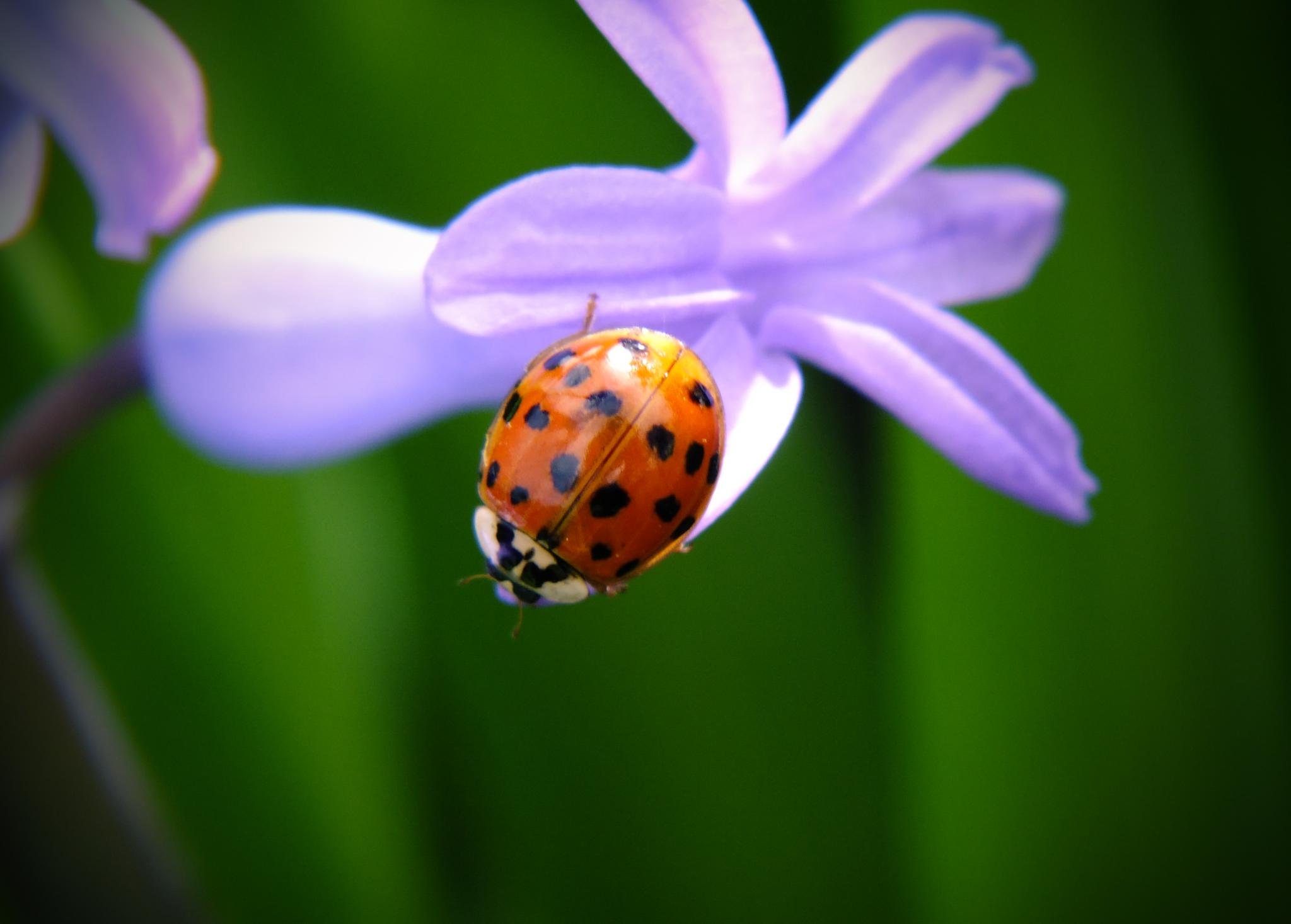 ladybird by Banhidai Beata