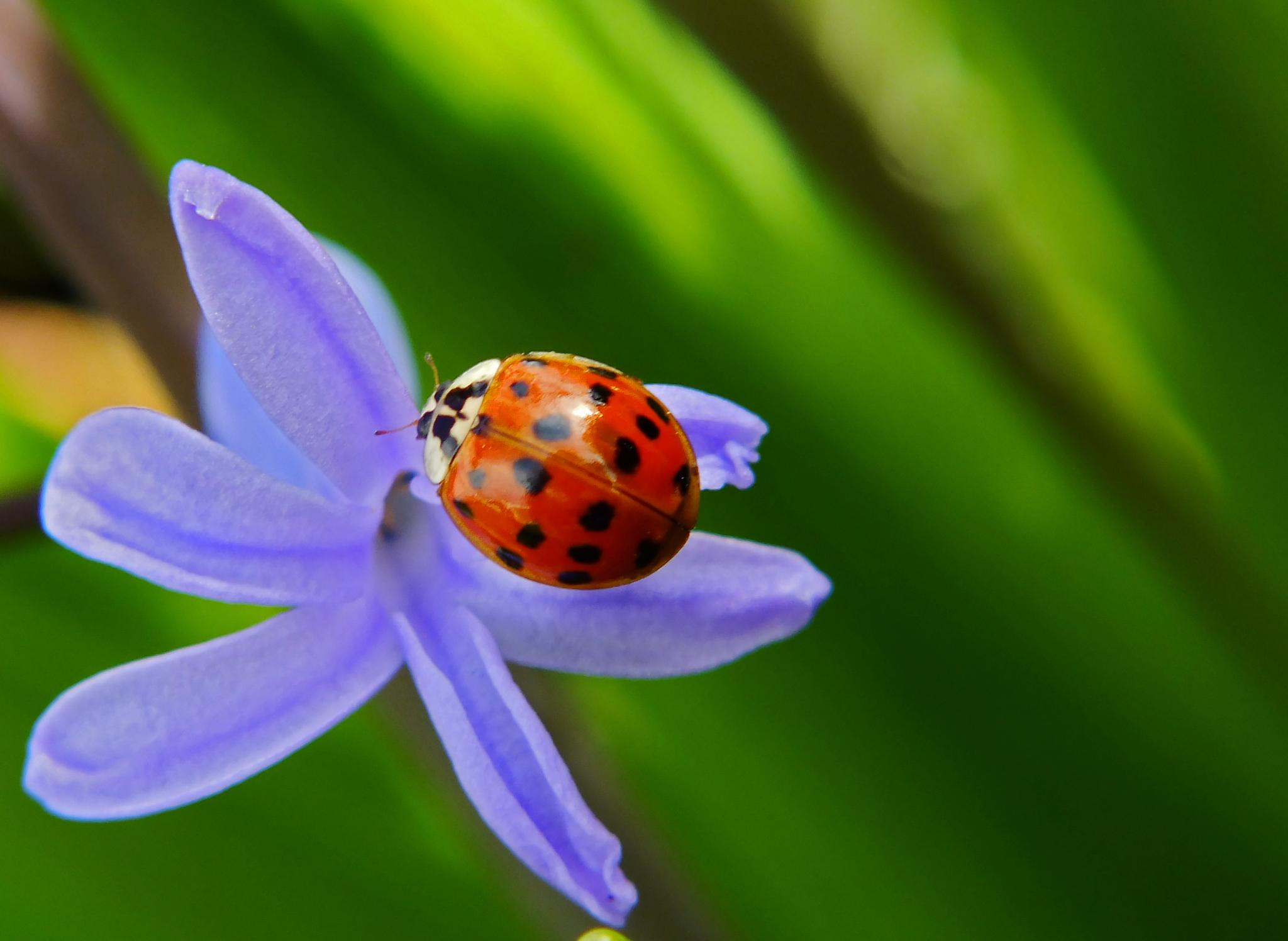 ladybug by Banhidai Beata