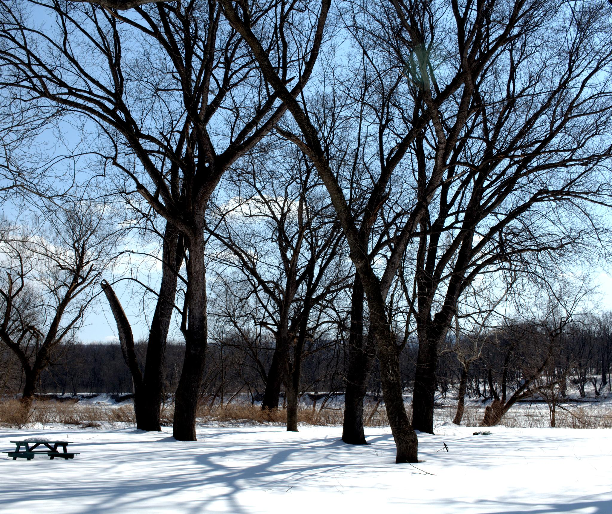 A Winter Picnic With My Camera by Shane Repasky