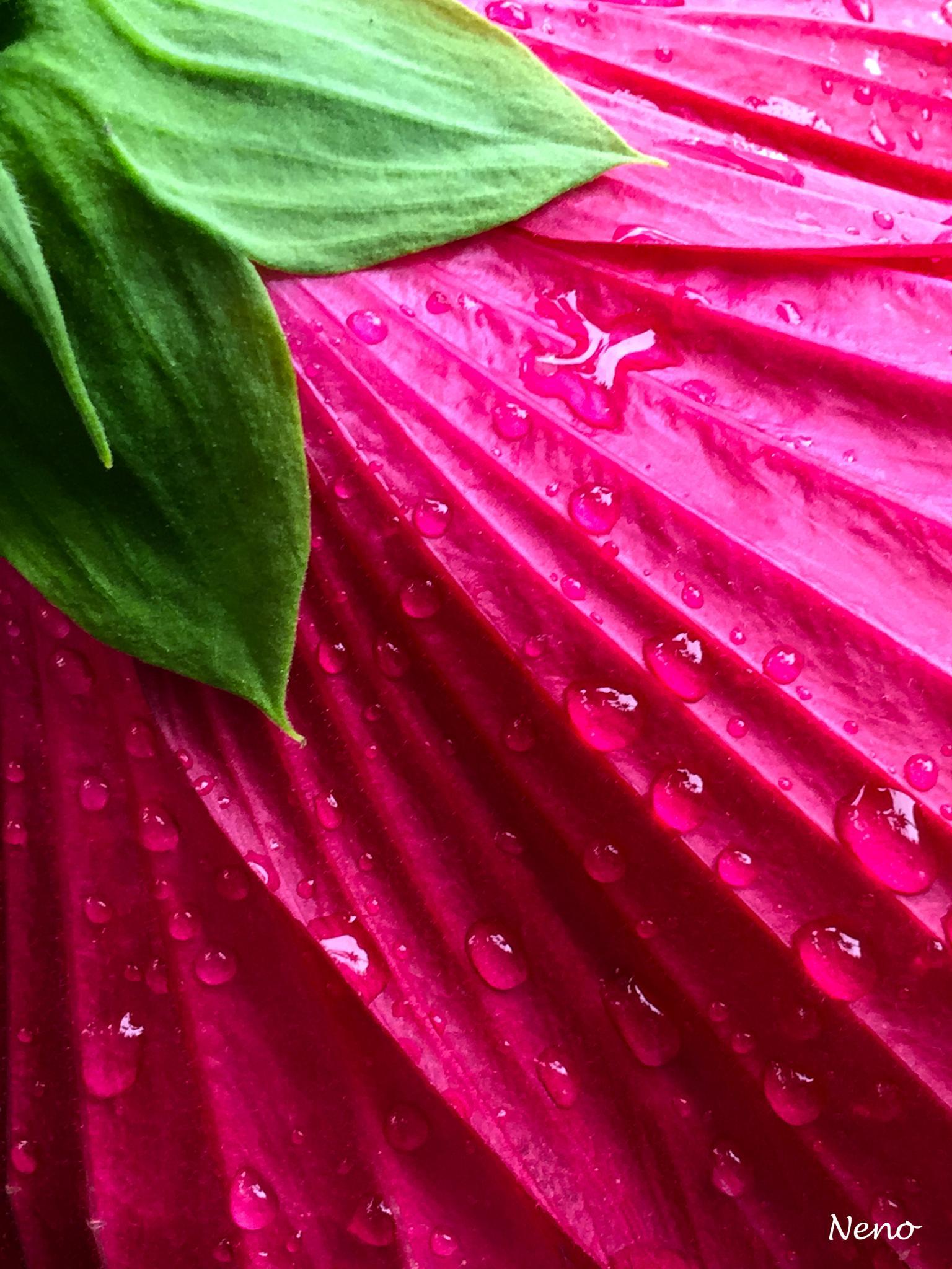 Fuchsia Skirt by irene.diaz.581
