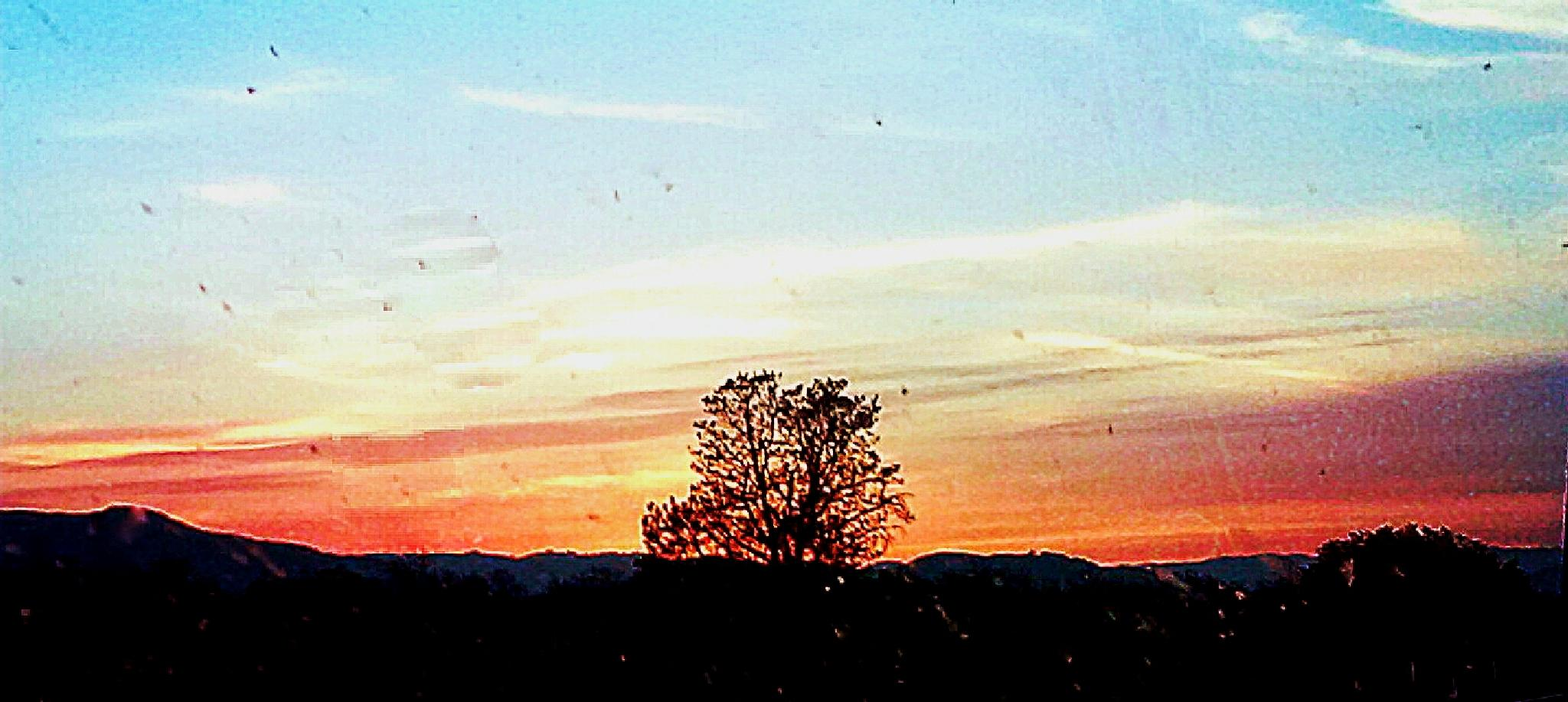 Lone Tree Sunset by frndlyghost2