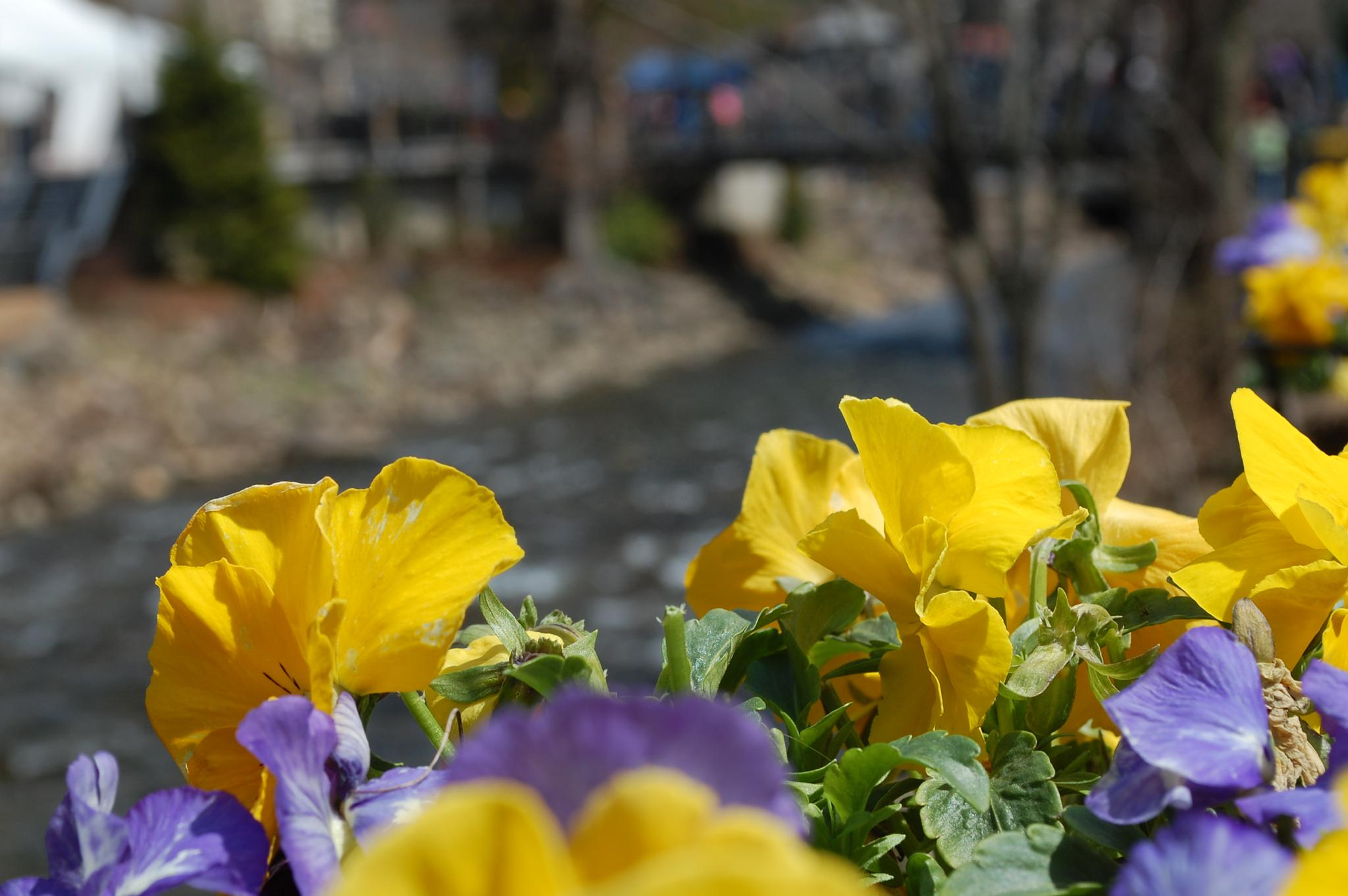 flowers with a view by kristin j clevenger