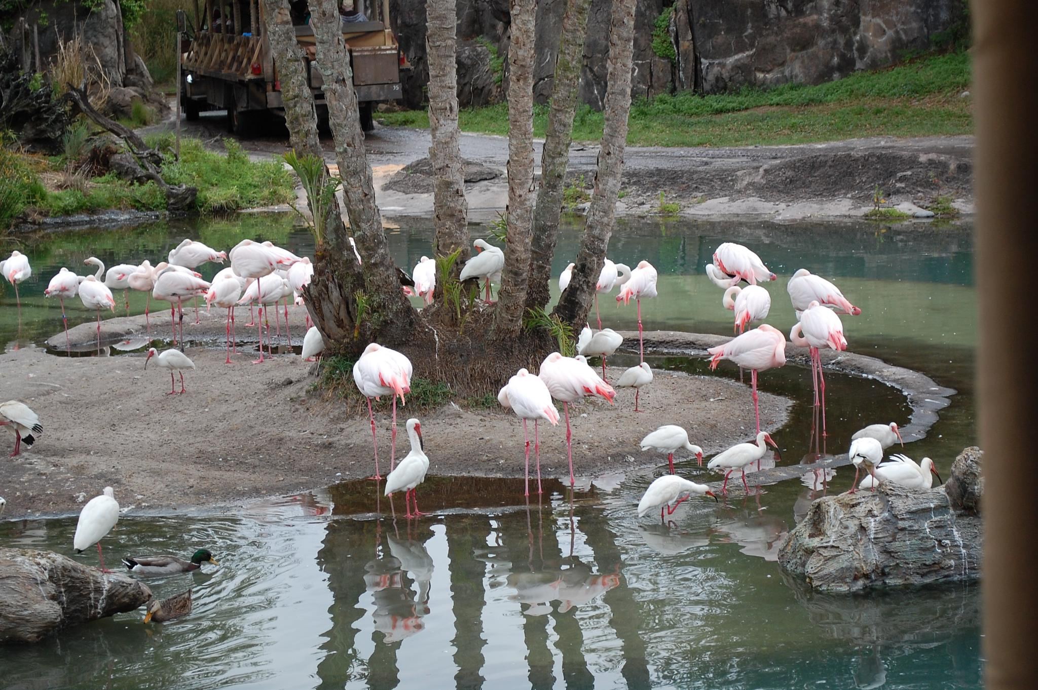 pink flamingos by kristin j clevenger