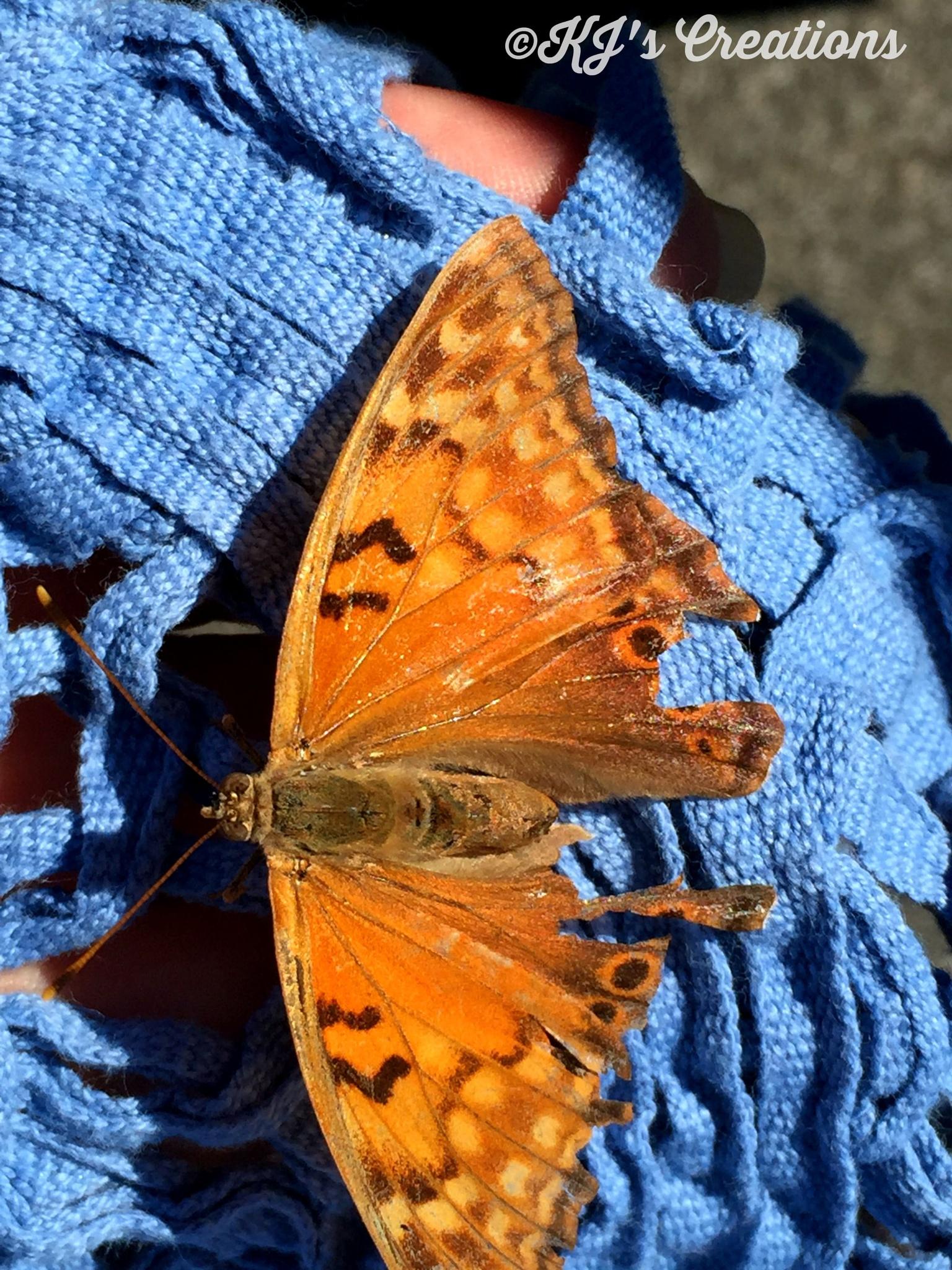 Broken butterfly-my buddy by kristin j clevenger
