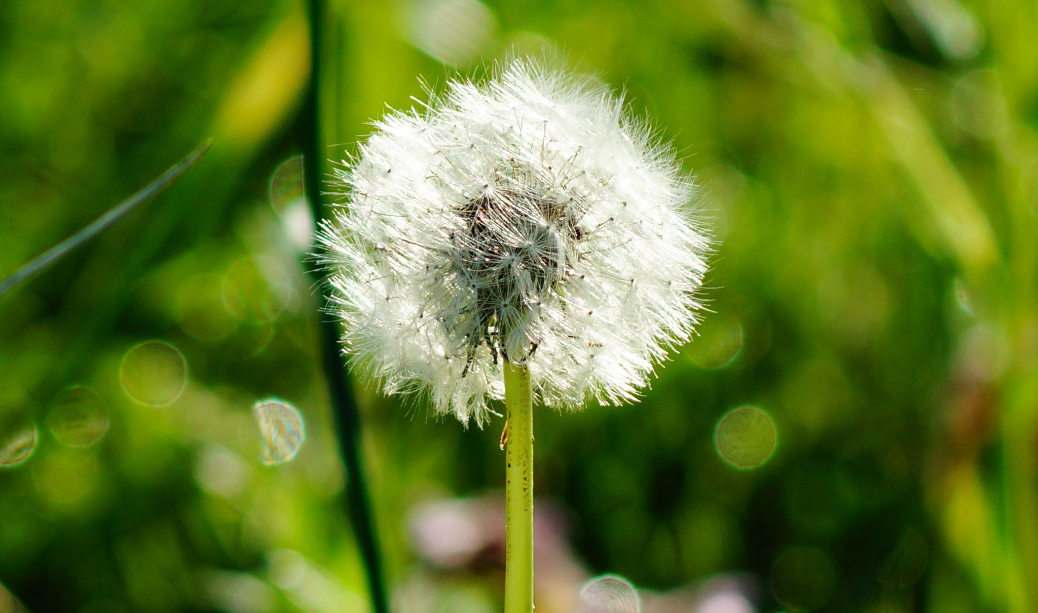 Look what Spring has sprang  by Jutta Angelika Reed