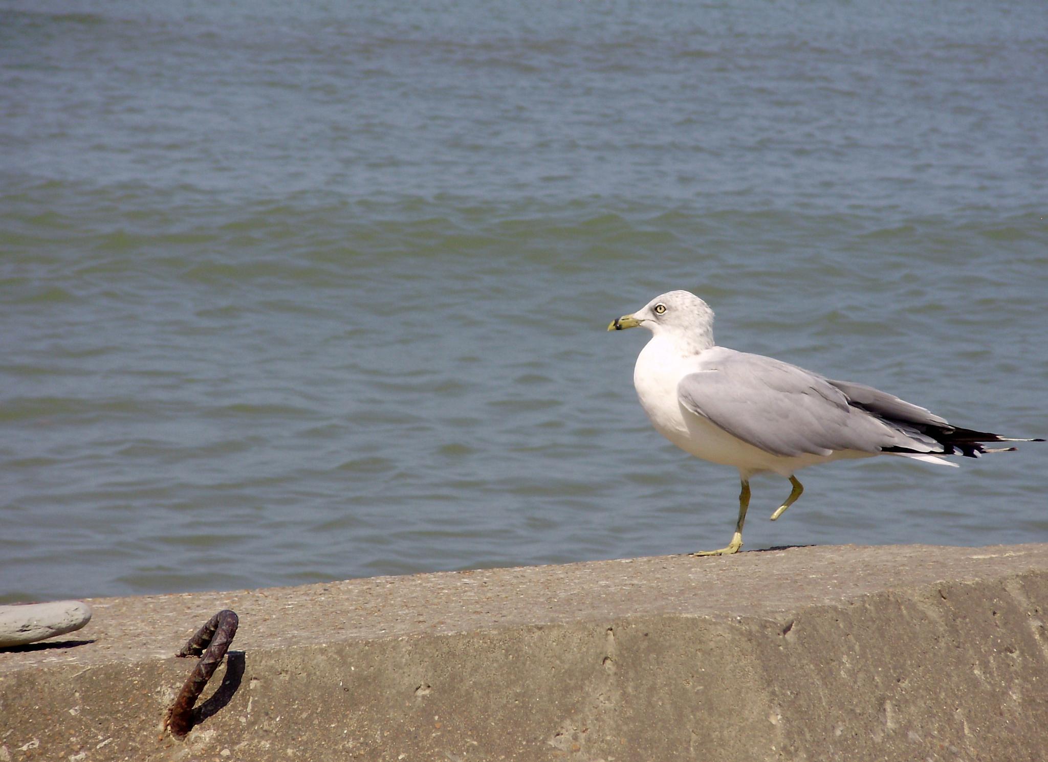 The Lone Seagull by mkunik