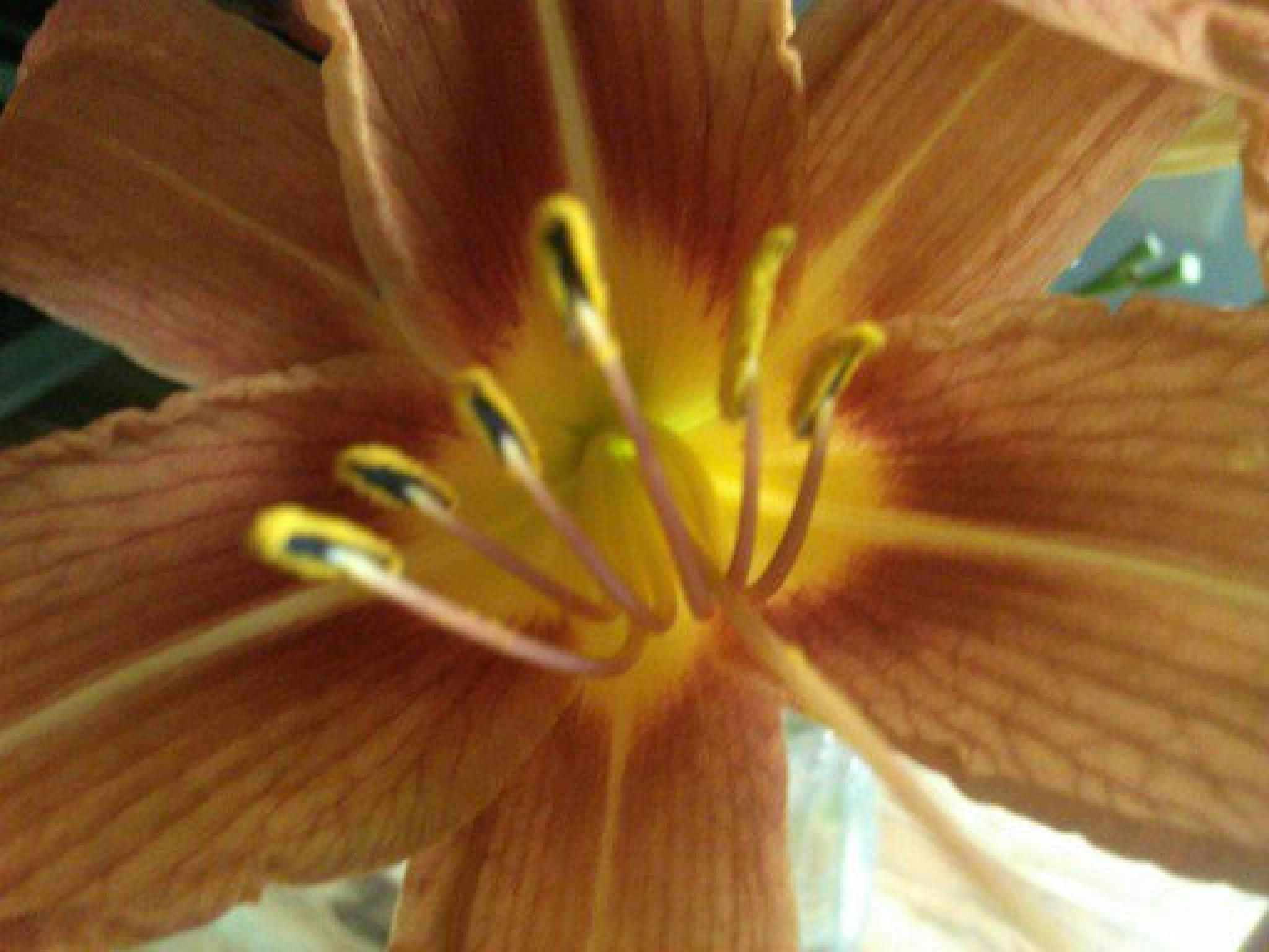 Tiger Lily by mkunik