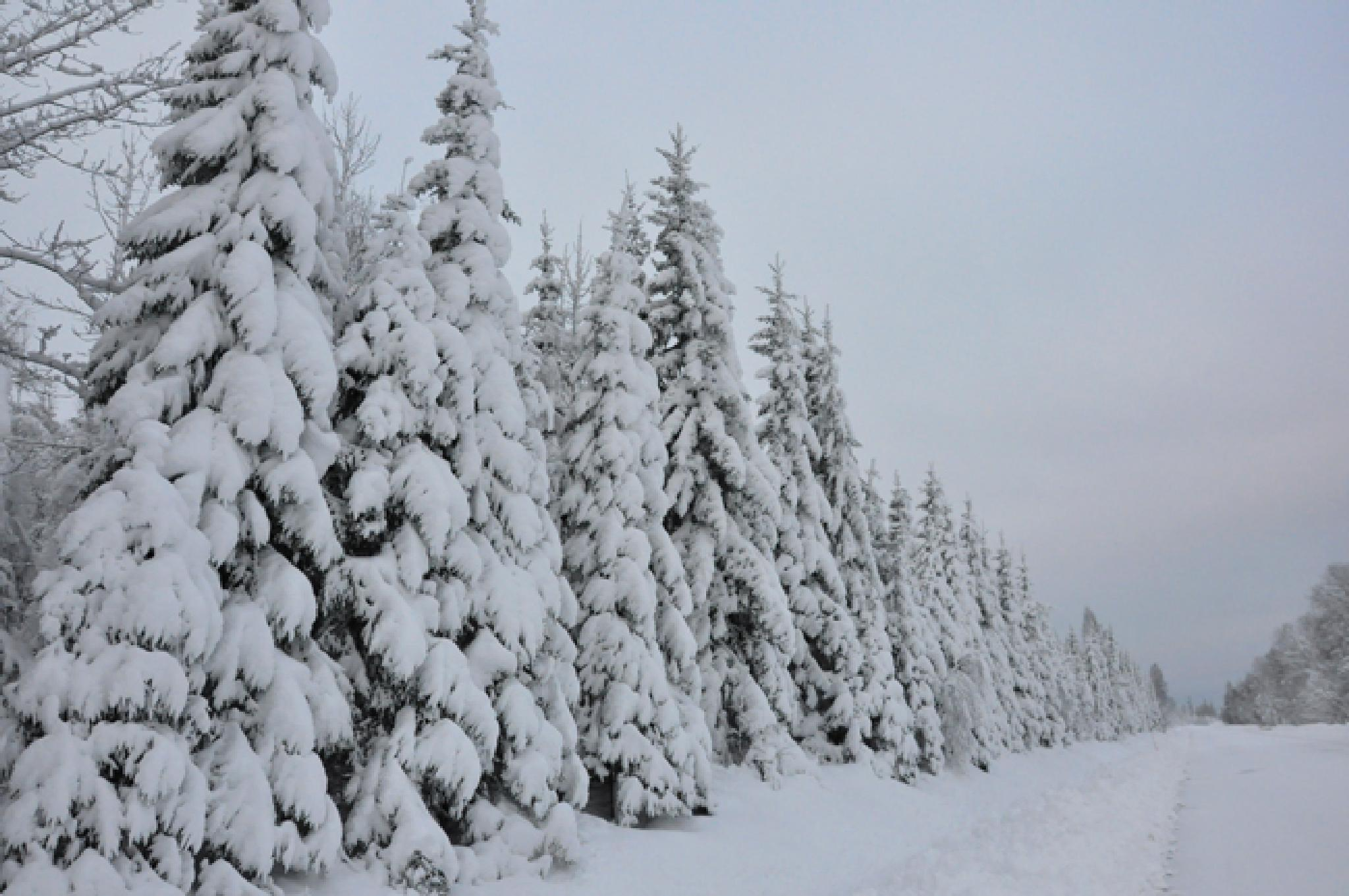 Winterafternoon by sirpakarki