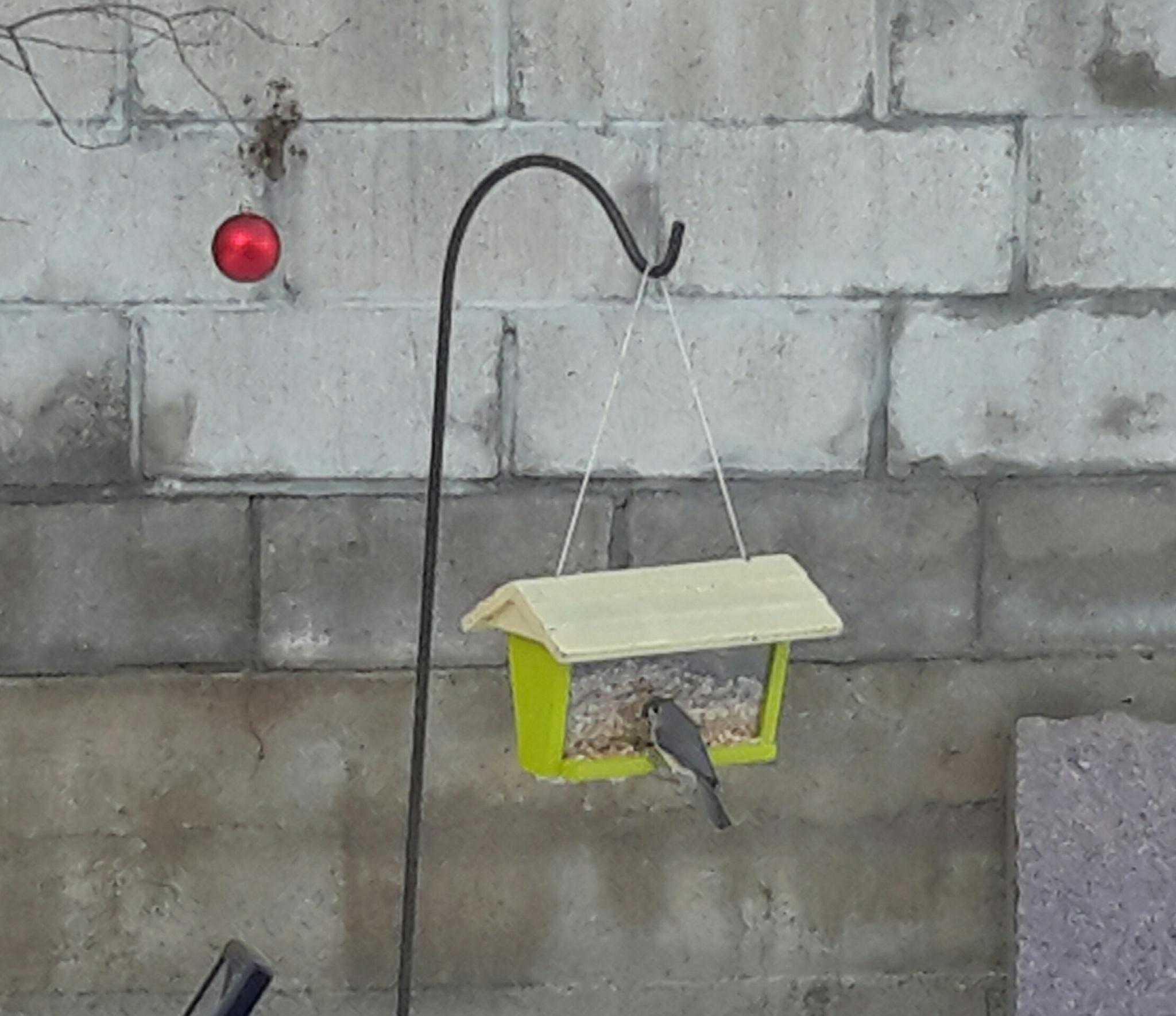Bird on the feeder by Karen McDonald