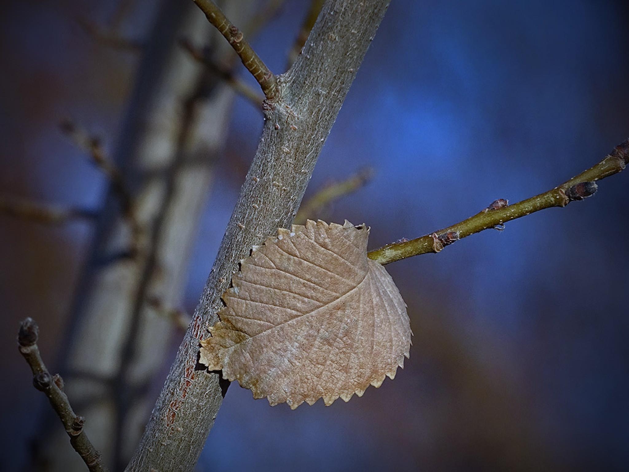 Leaf by maryam 4