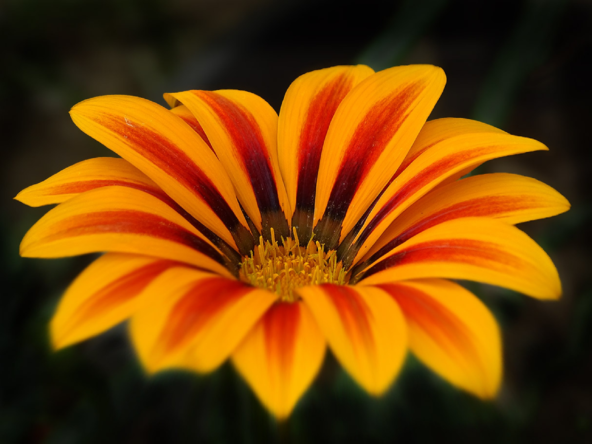 Flower by maryam 4