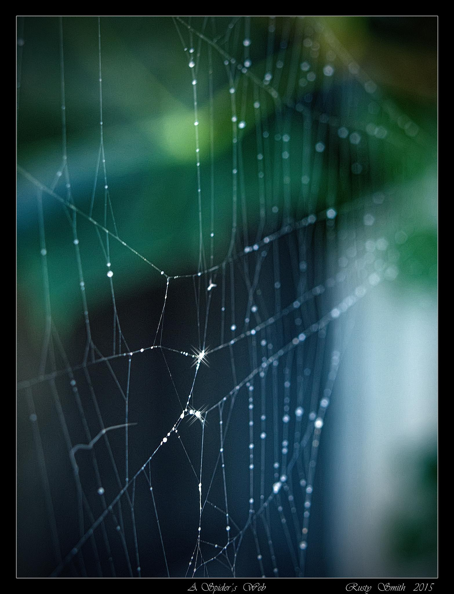 A Spider's Web by rsmithdigital