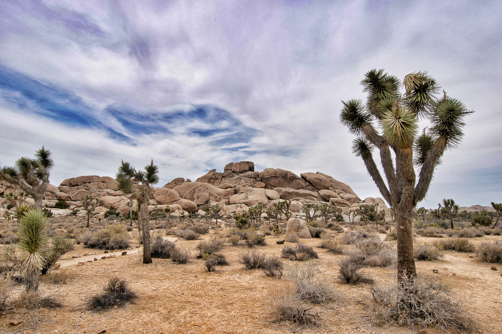Joshua Tree National Park by Andy Dilling