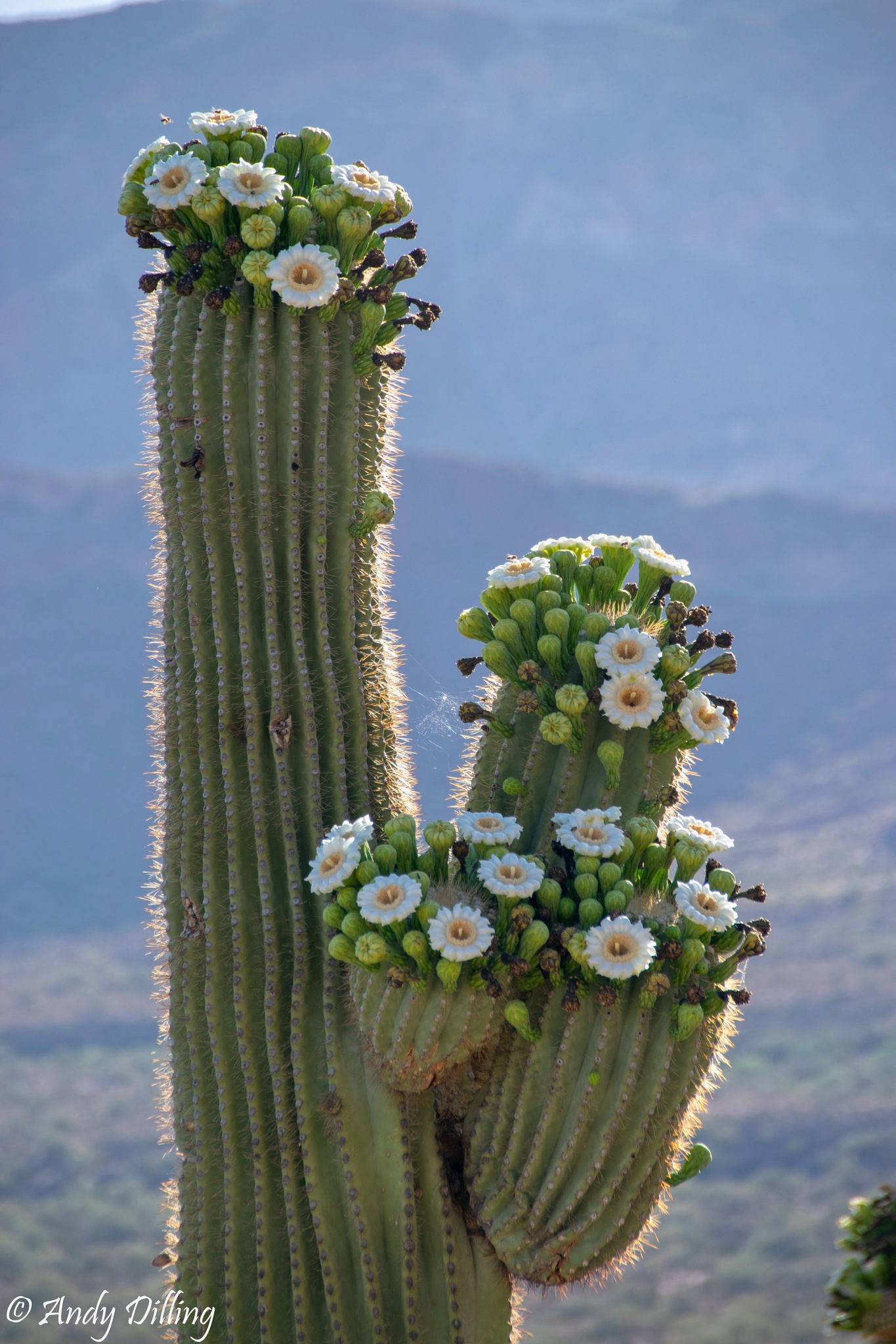 A desert bouquet by Andy Dilling
