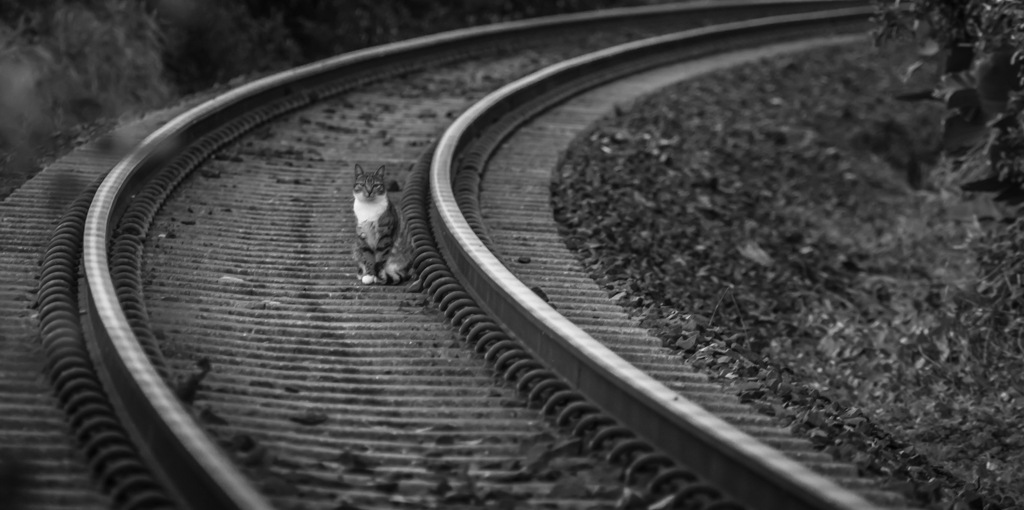 Cat on the track by georgewatson1654