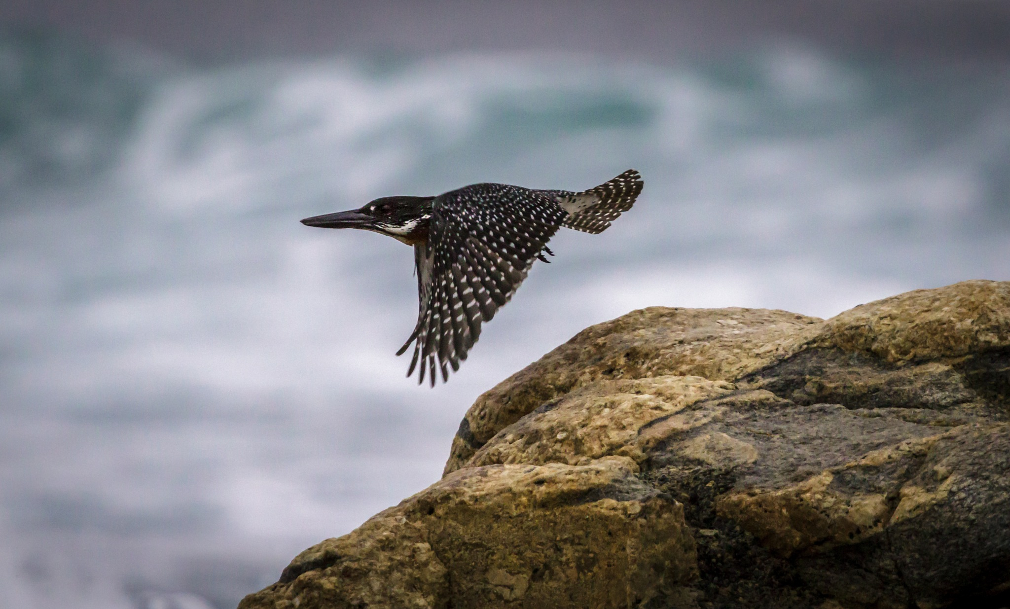 Giant Kingfisher by georgewatson1654