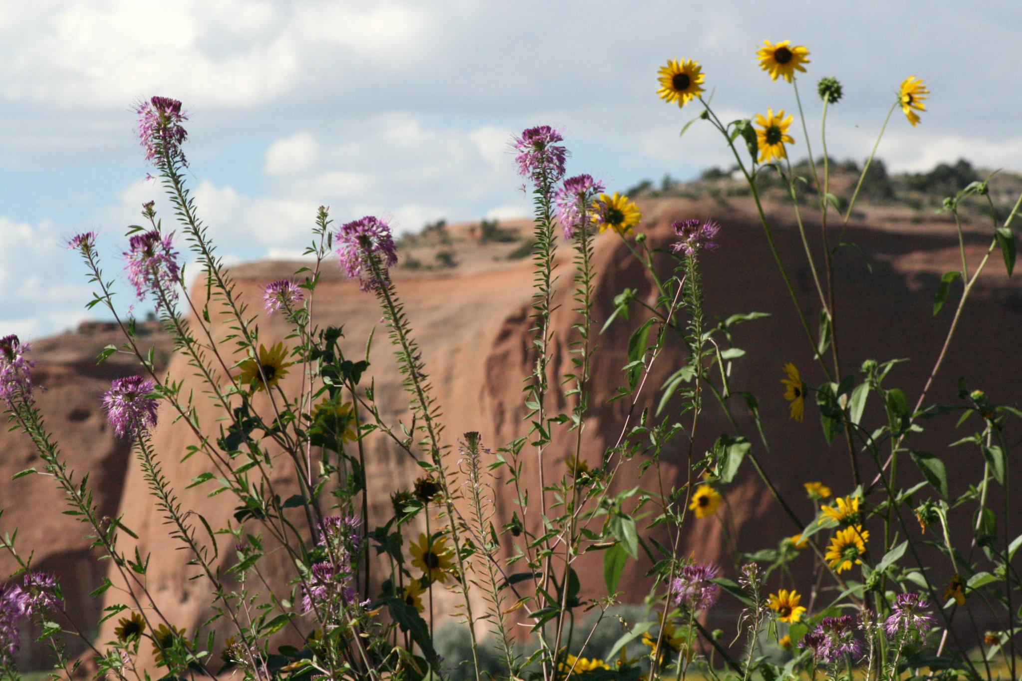 Purple and Yellow Wildflowers by Leandra MH Stewart
